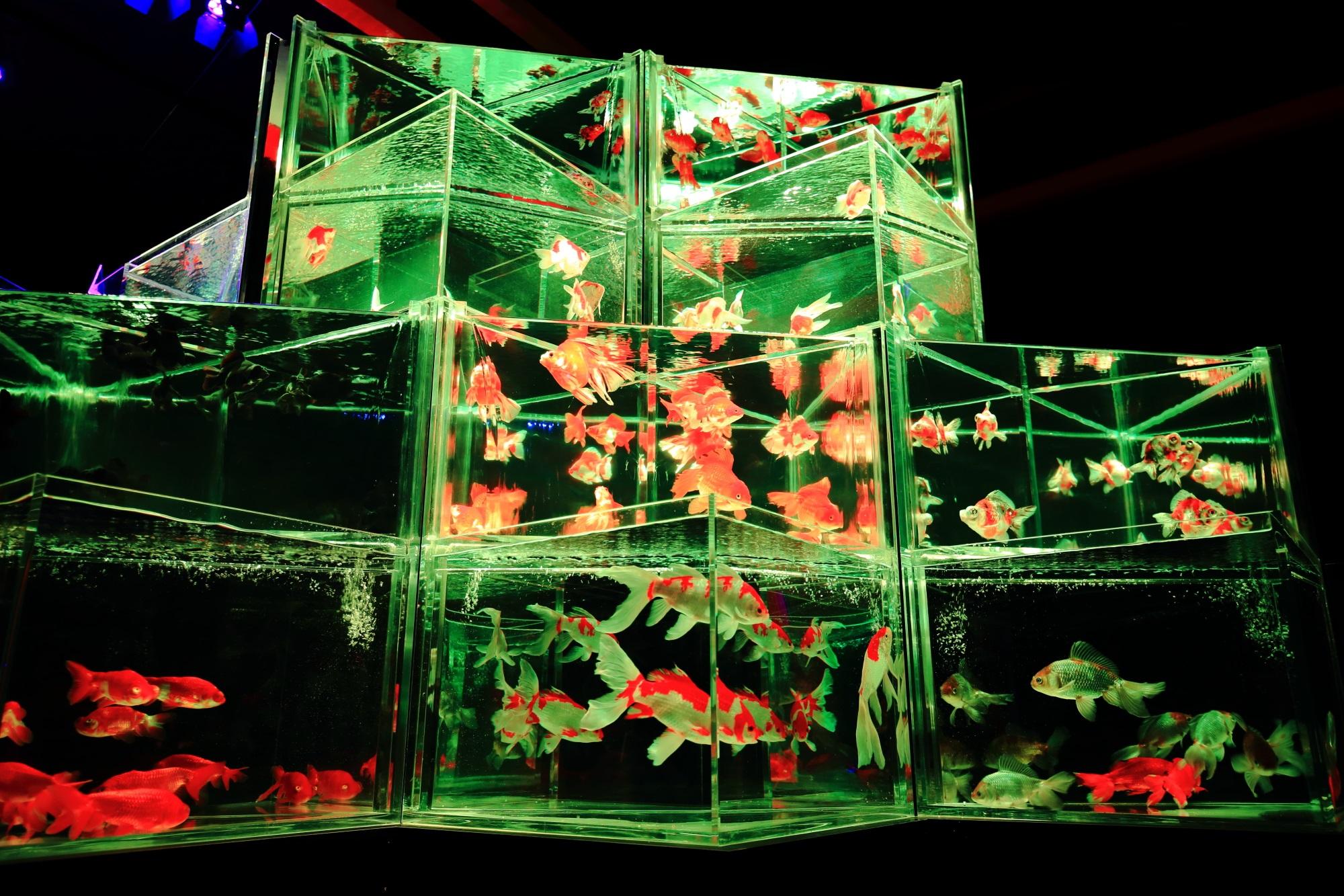 金魚の舞 アートアクアリウム城 大奥