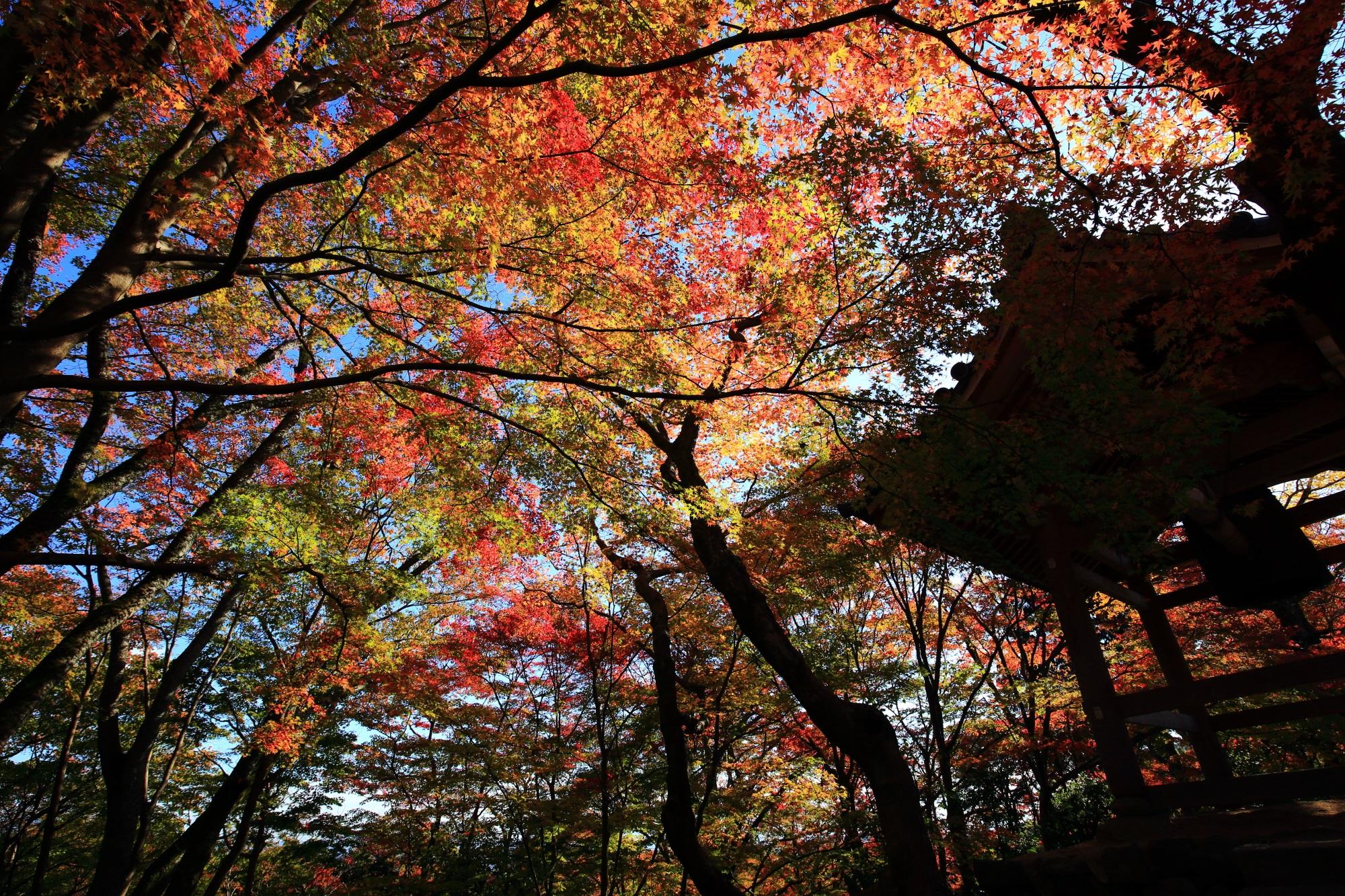 美しい紅葉につつまれた常寂光寺の鐘楼