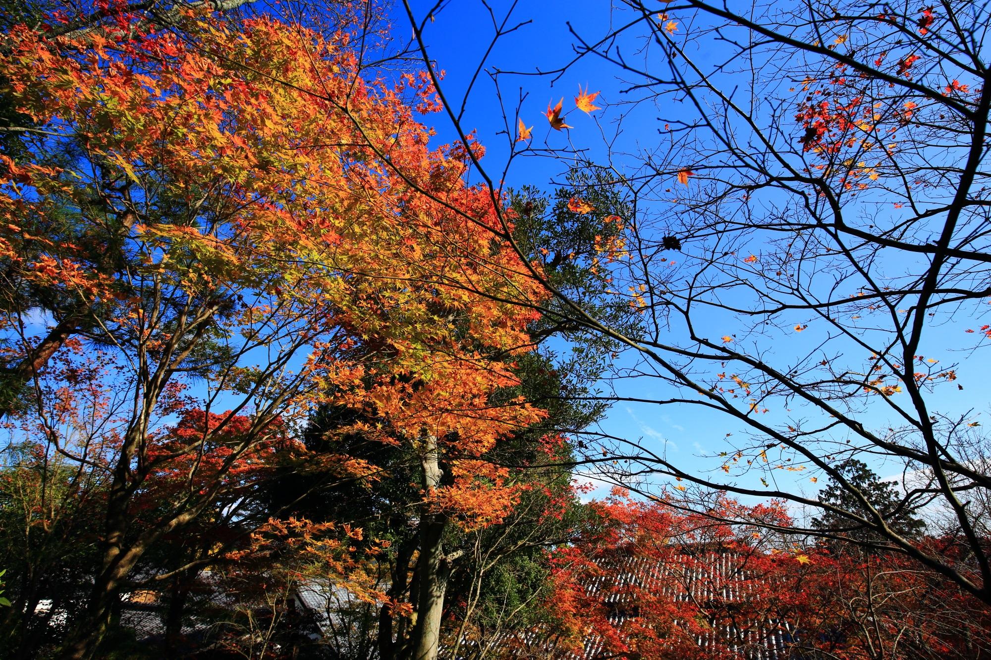 常寂光寺の本堂と見ごろの綺麗な紅葉