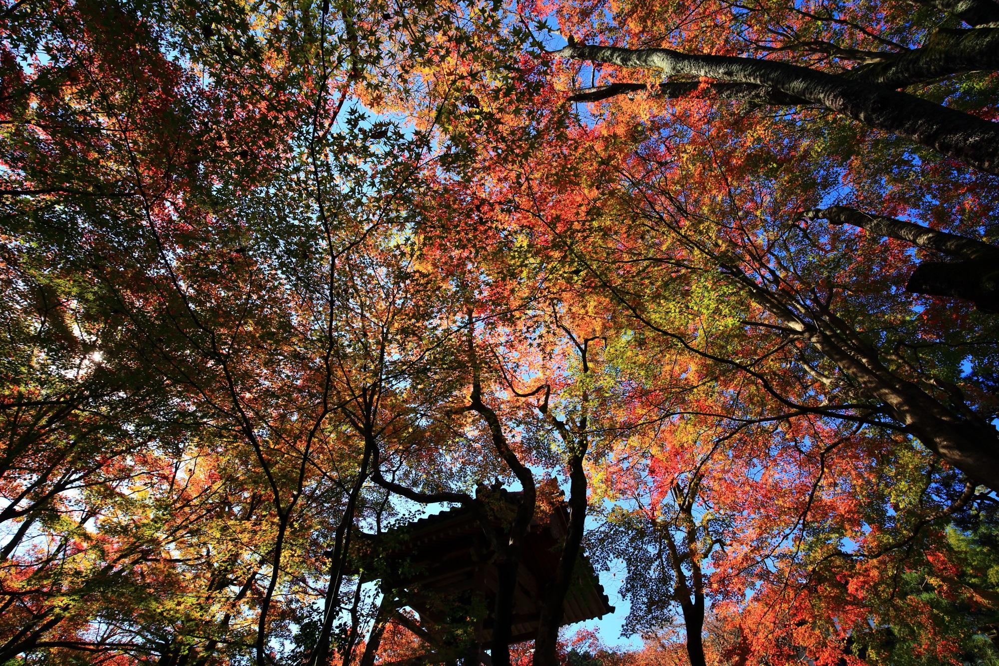 鮮やかな紅葉につつまれた奥嵯峨のもみじの名所の常寂光寺の鐘楼
