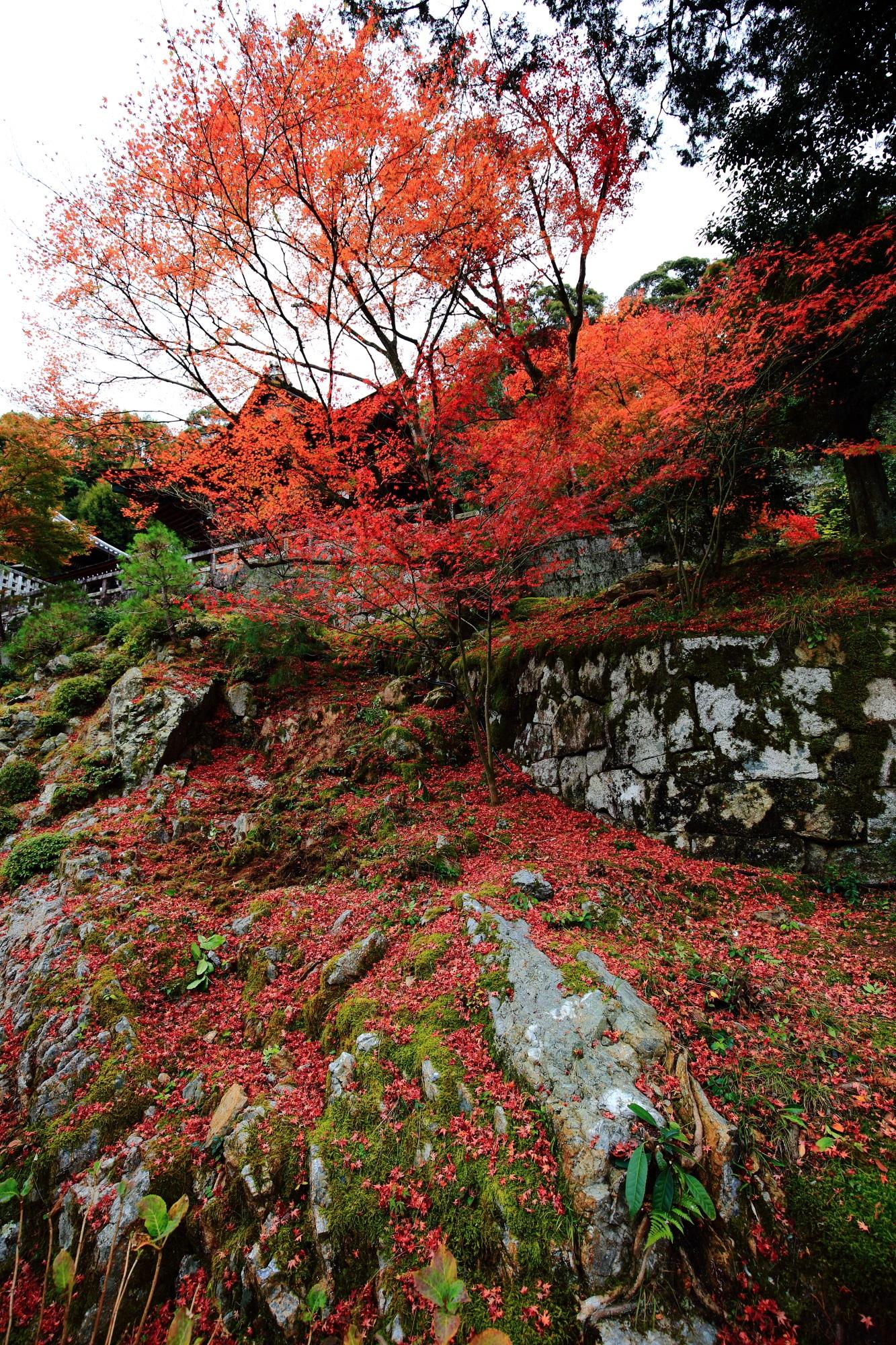 御廟前の苔の生えた石垣に散る圧巻の紅葉