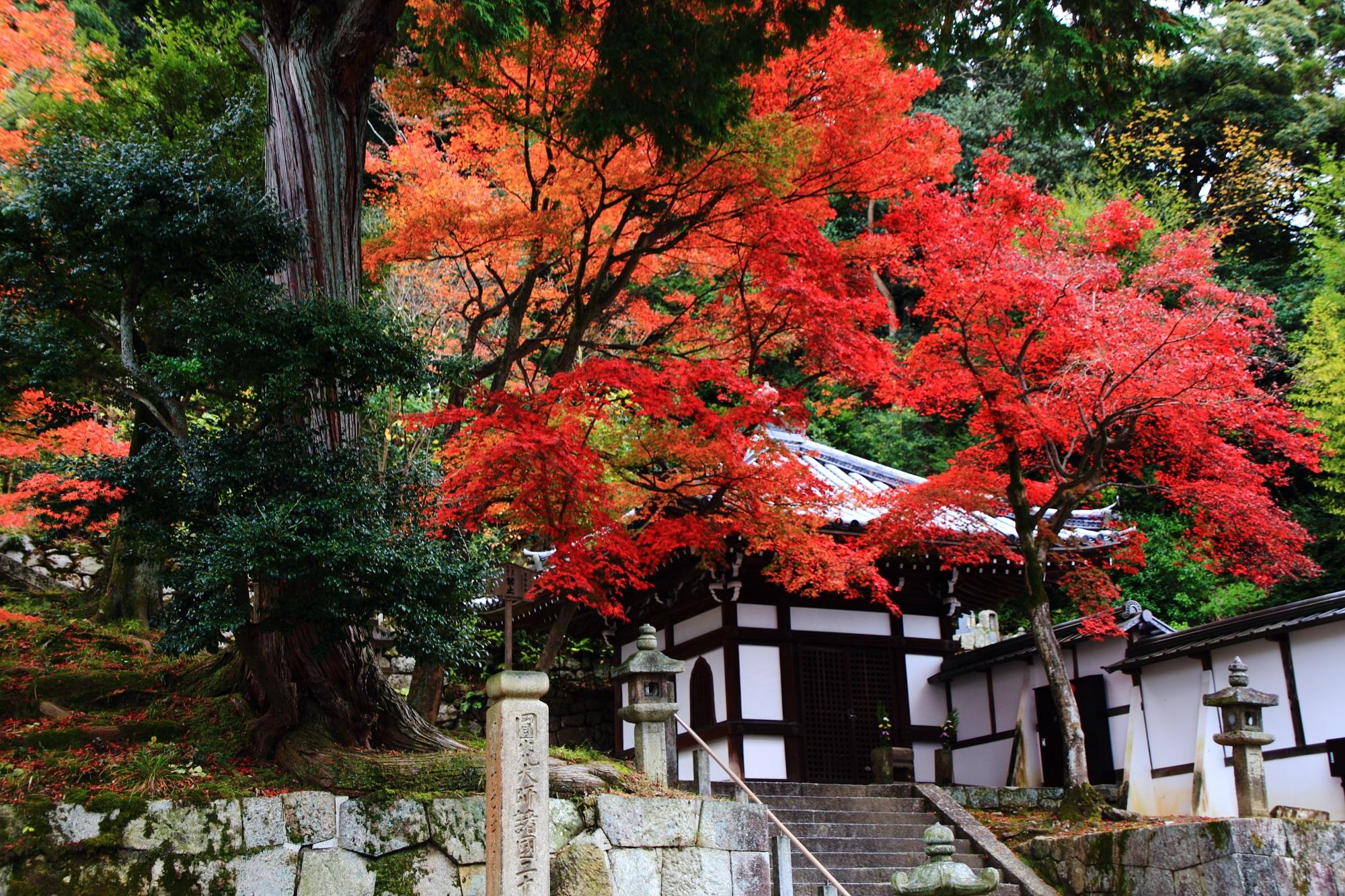 多様な緑の中で華やぐ鮮やかな紅葉