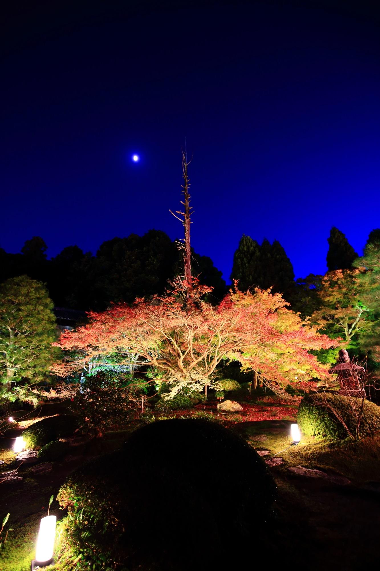 泉涌寺別院のうんりゅういんの庭園の紅葉ライトアップ
