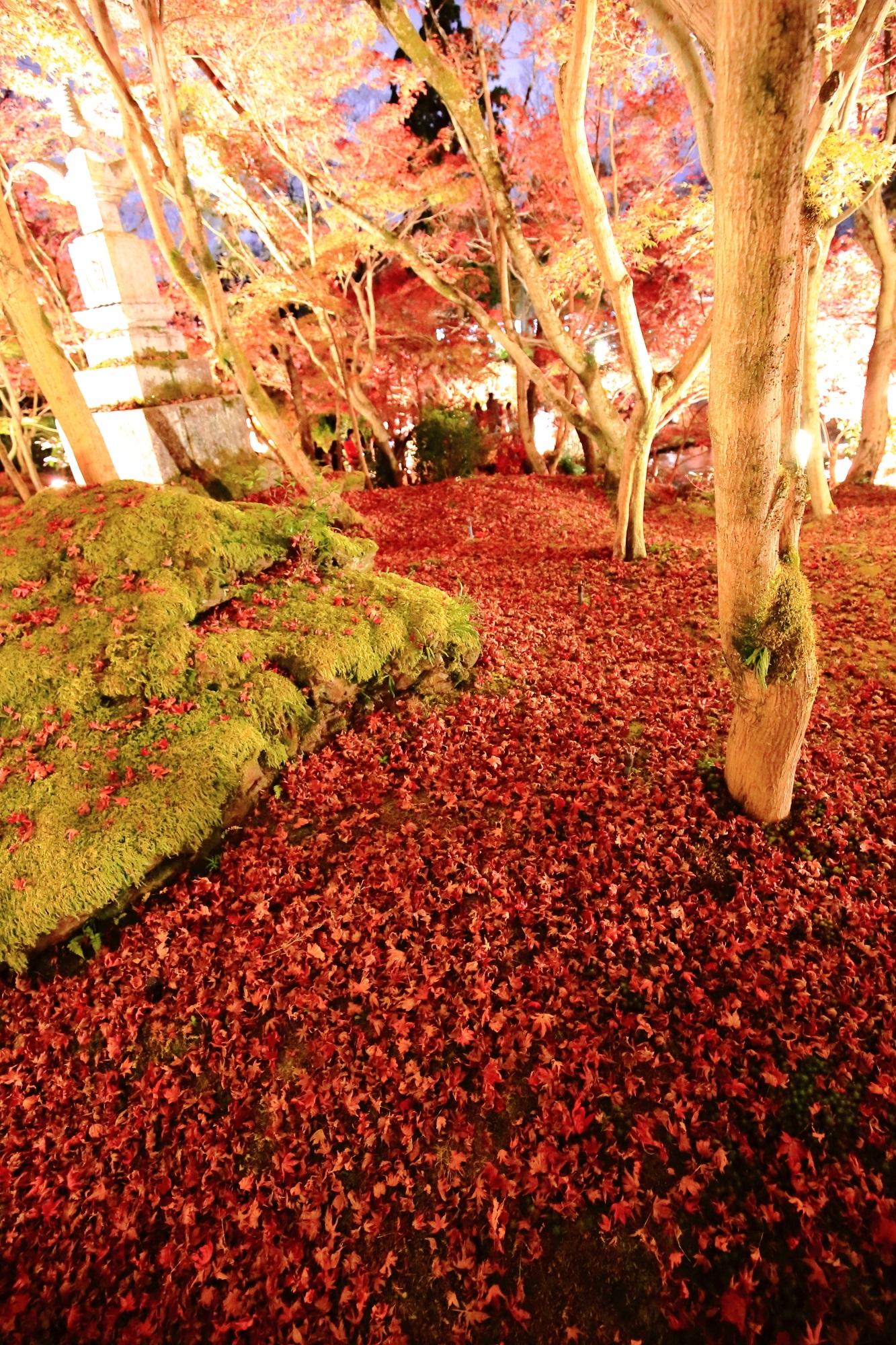 紅葉名所の永観堂の紅葉と散りもみじ