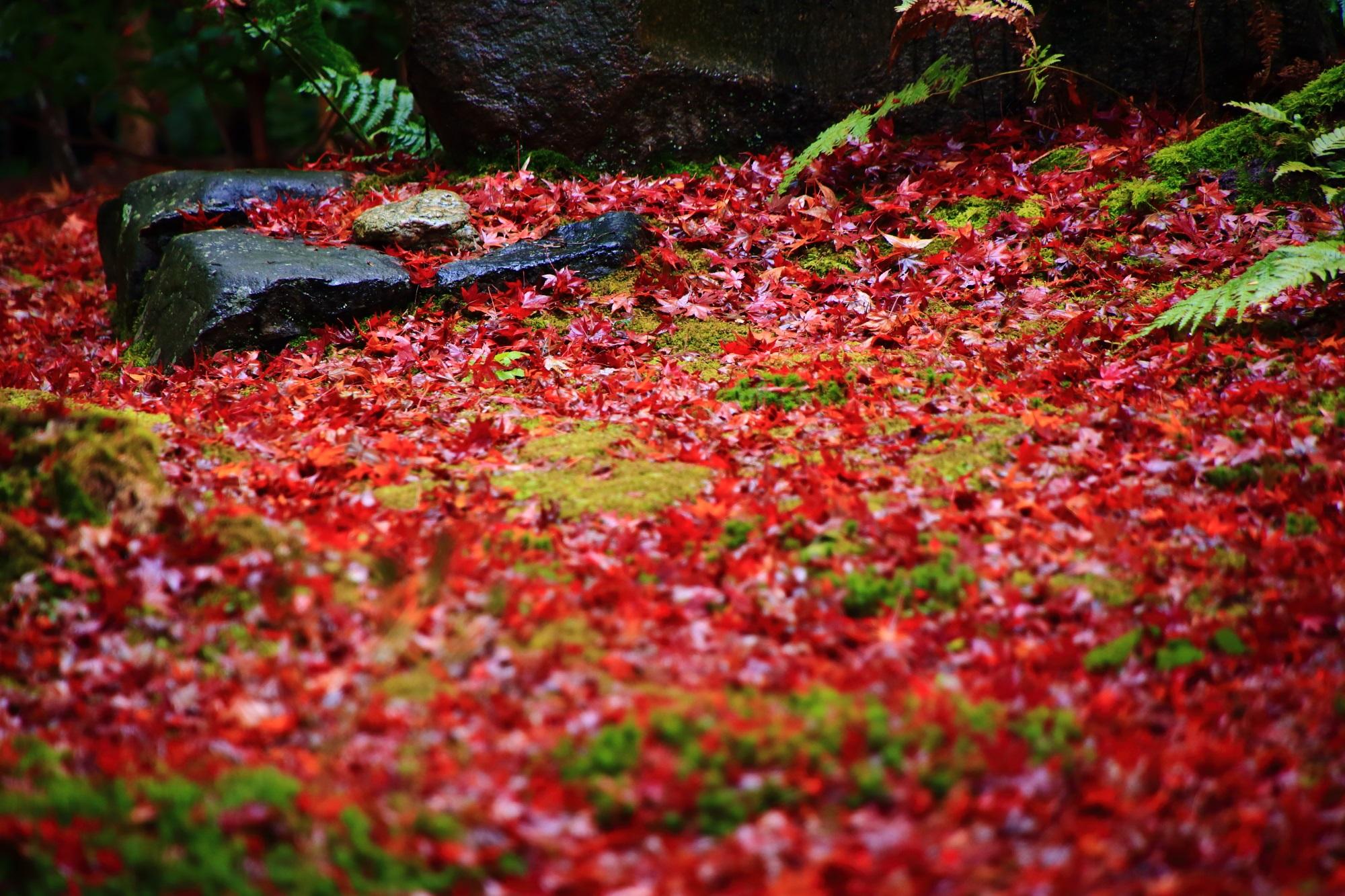 美しい散り紅葉につつまれた直指庵の苔庭