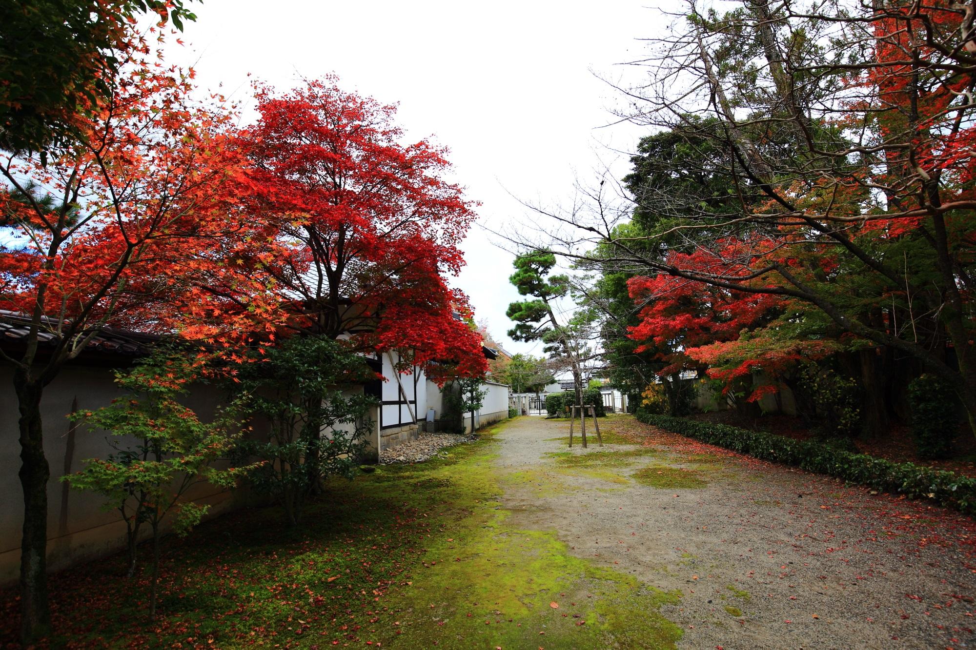 廬山寺の参道の美しい紅葉