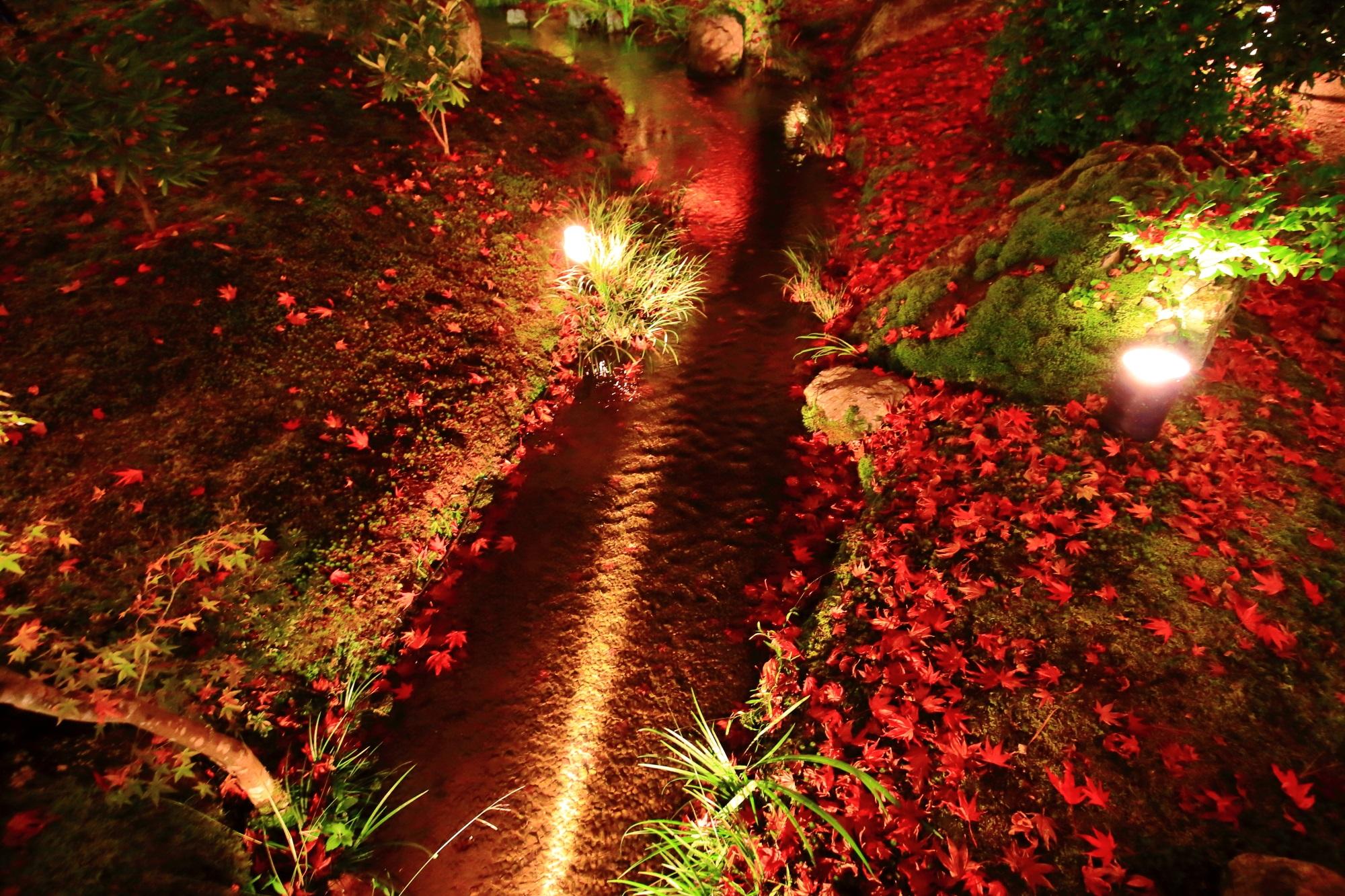 宝厳院 獅子吼の庭 散りもみじ ライトアップ 鮮やか