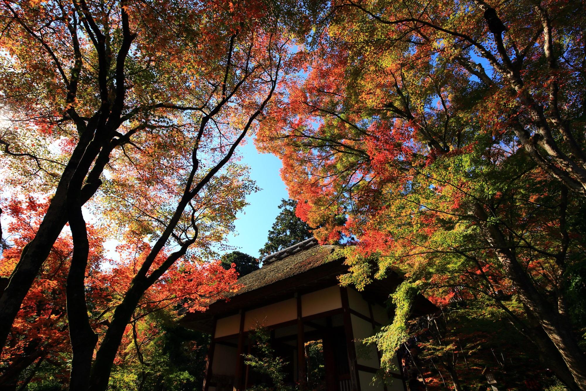 常寂光寺の仁王門と色とりどりのキラキラした紅葉