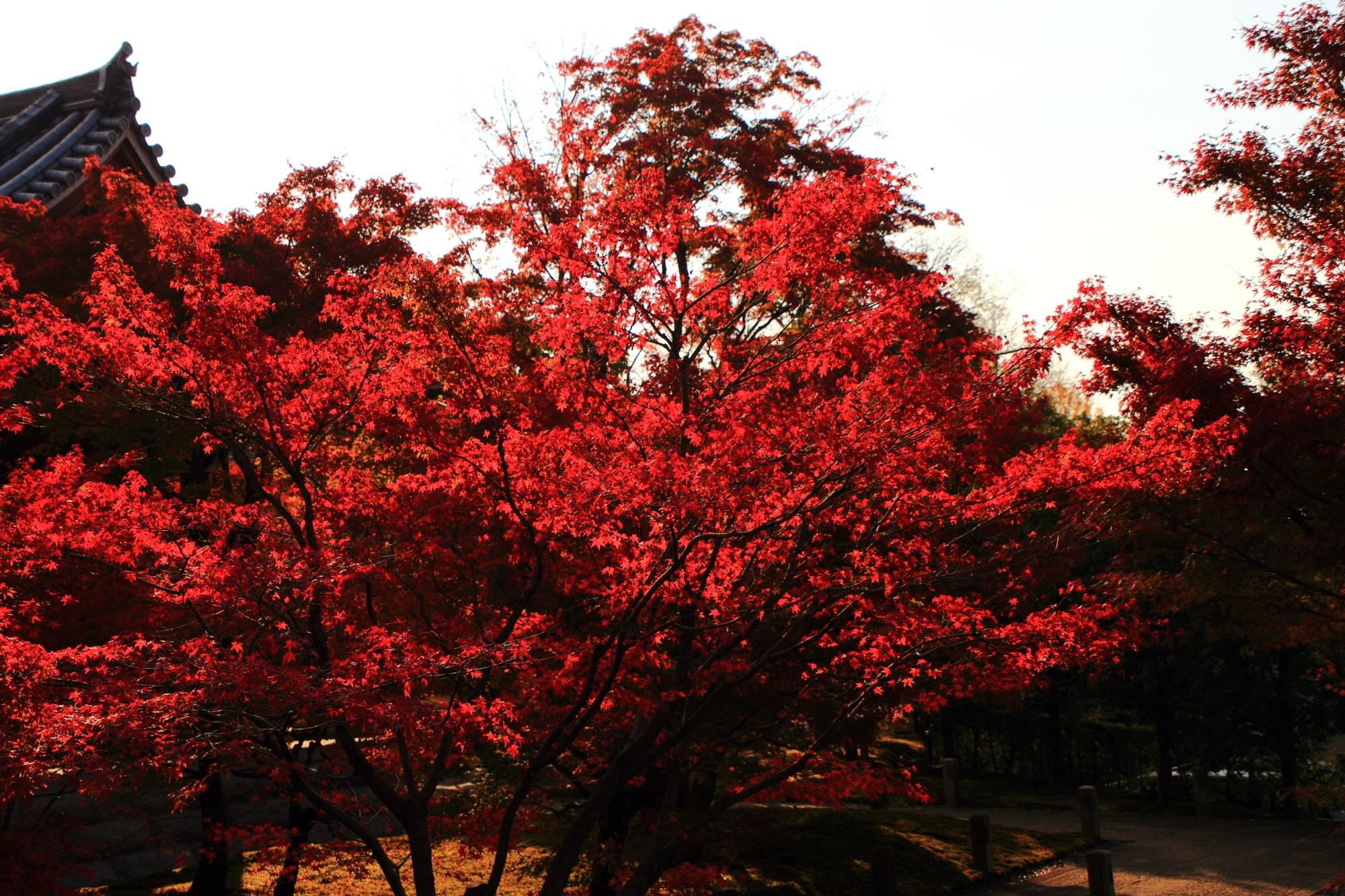 鐘楼を秋色に染める燃えるような真っ赤な紅葉