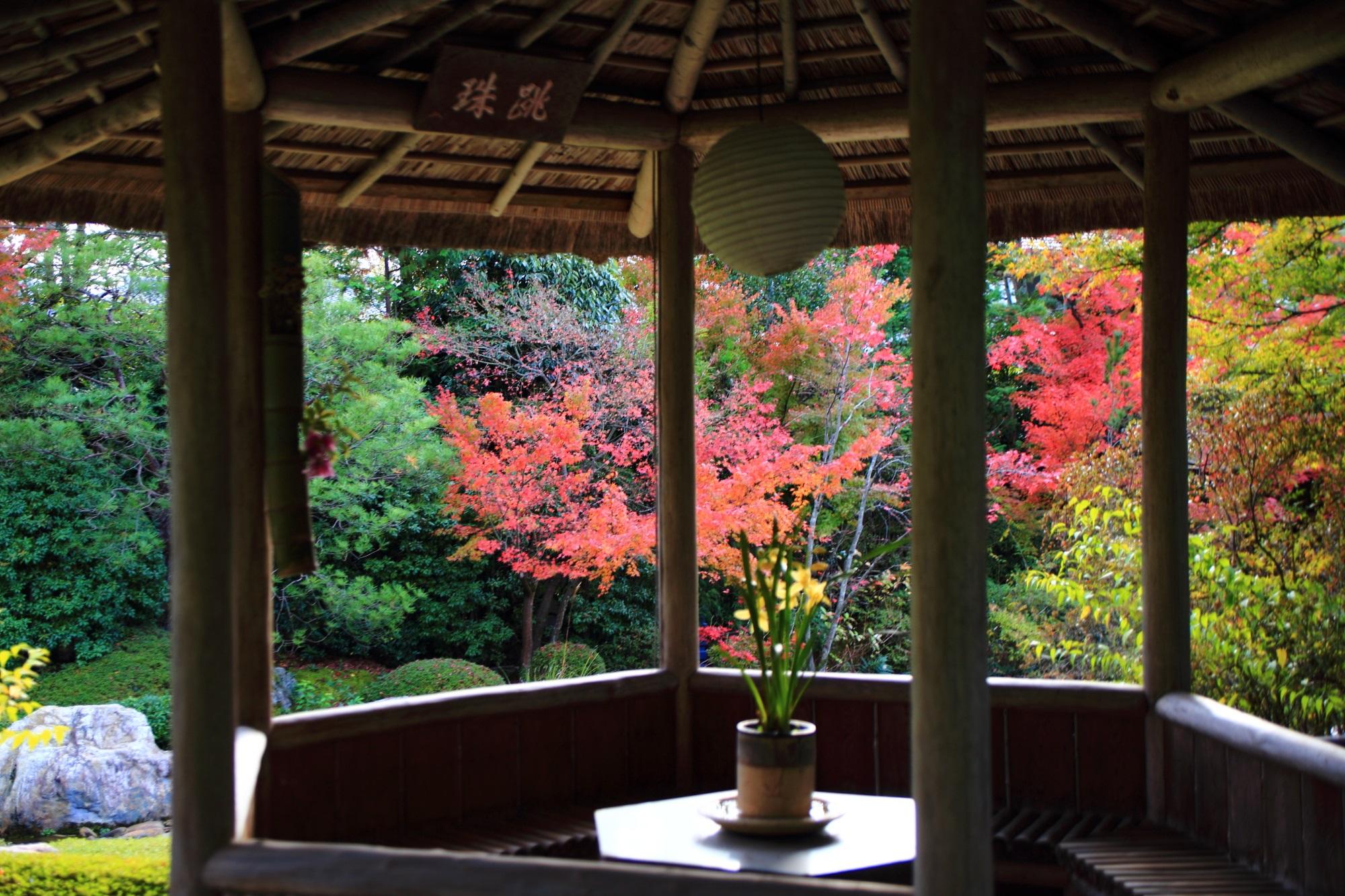 秋の多彩な彩りにつつまれる風情ある余香苑