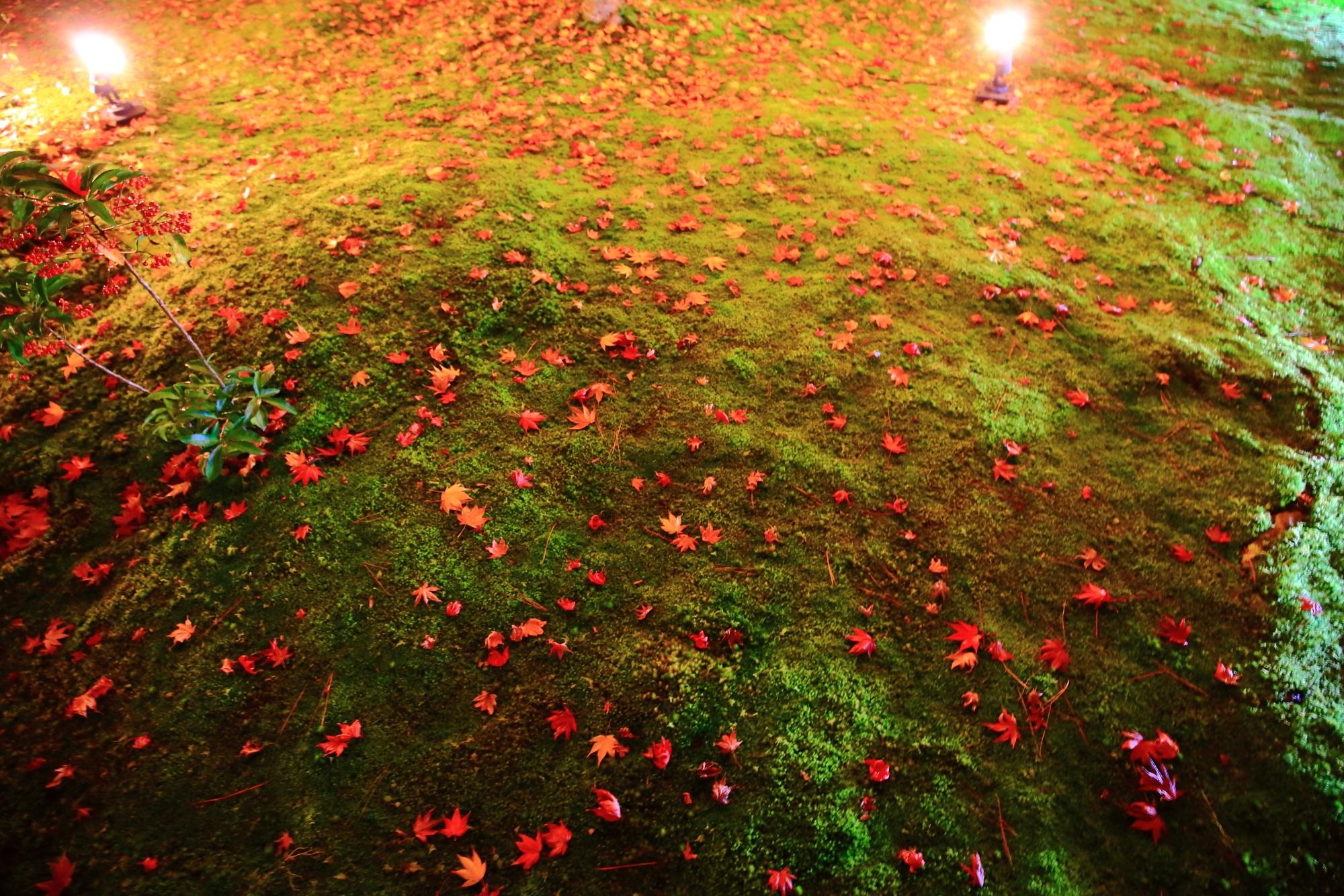 宝厳院の獅子吼の庭の苔と散りもみじのライトアップ