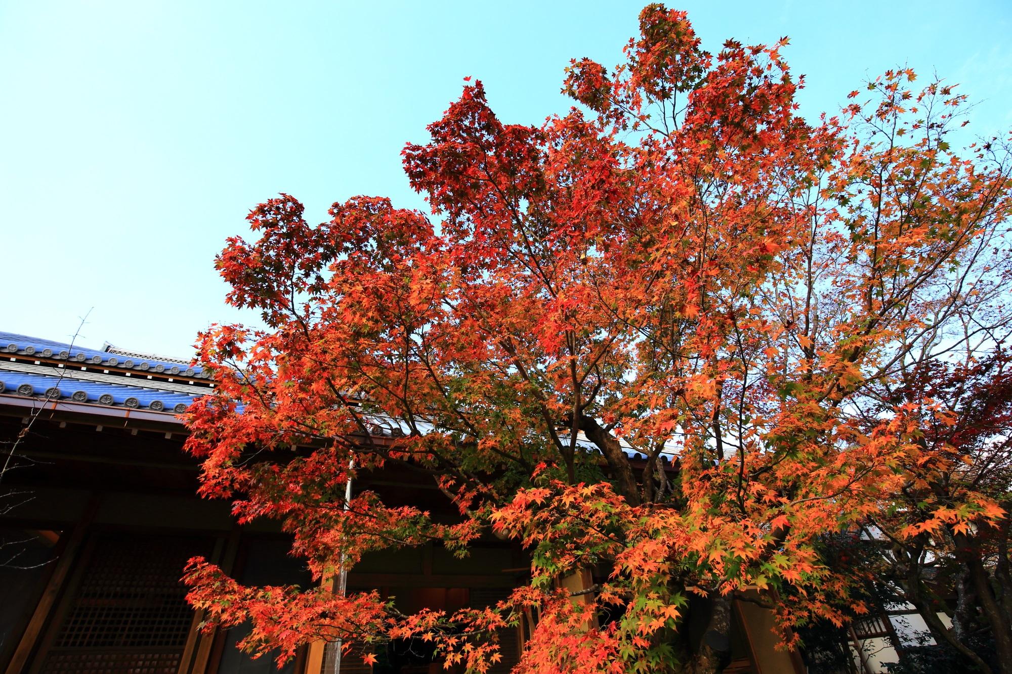紅葉につつまれた常寂光寺の本堂