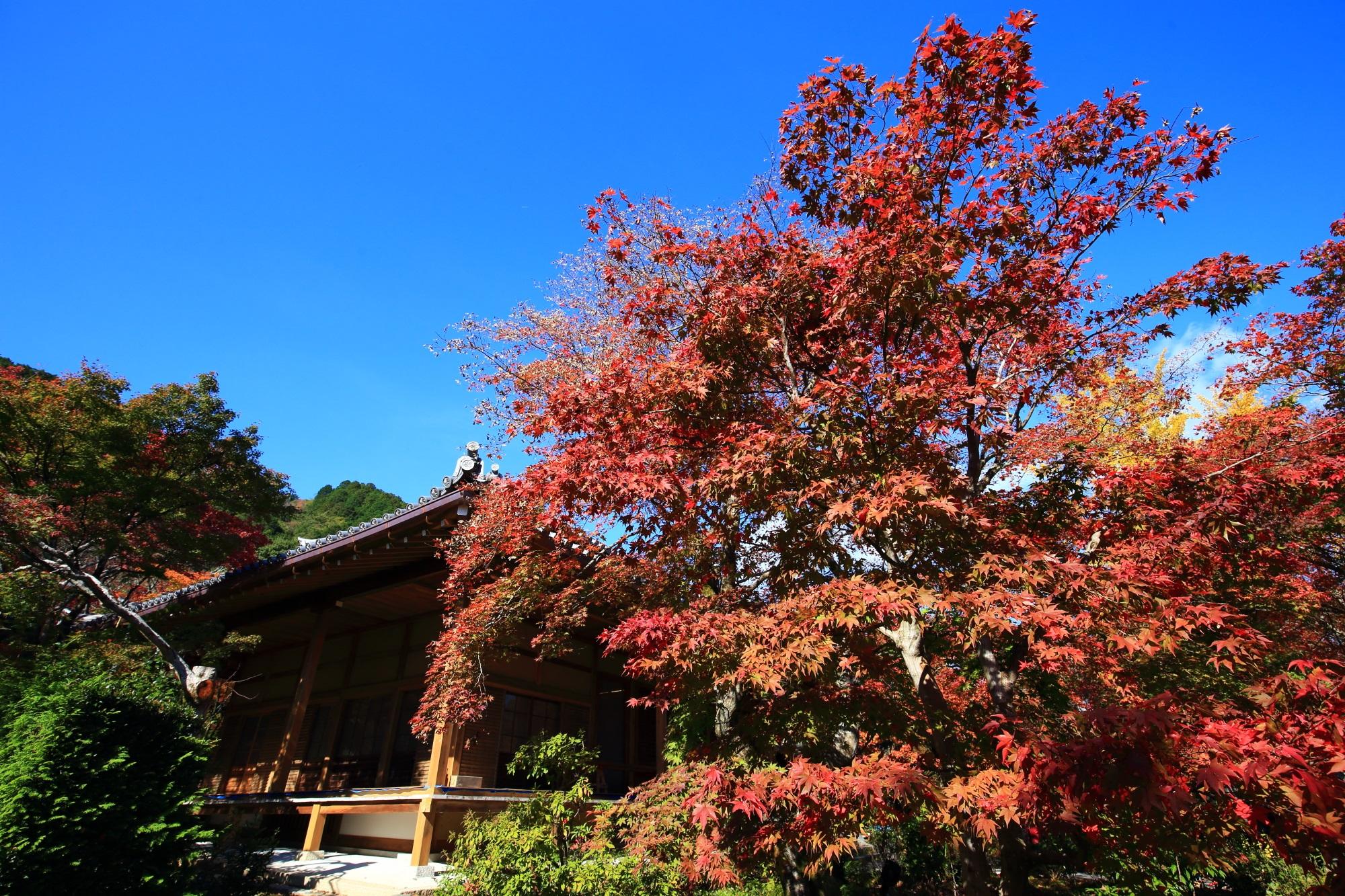 常寂光寺の本堂と見ごろの紅葉