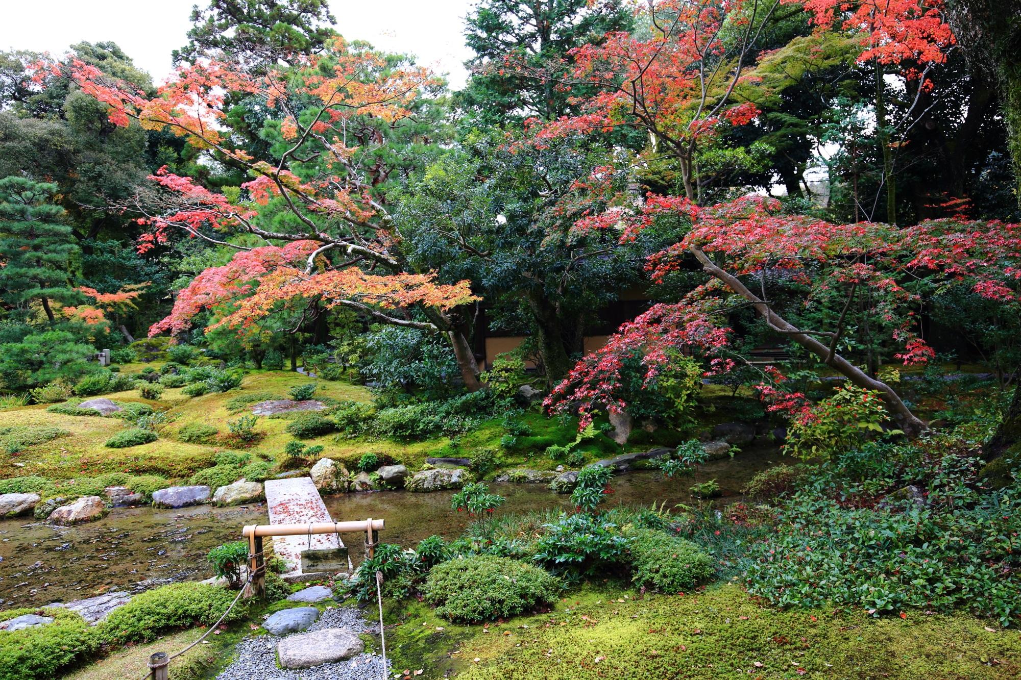 多種多様な緑の中で華やぐ紅葉