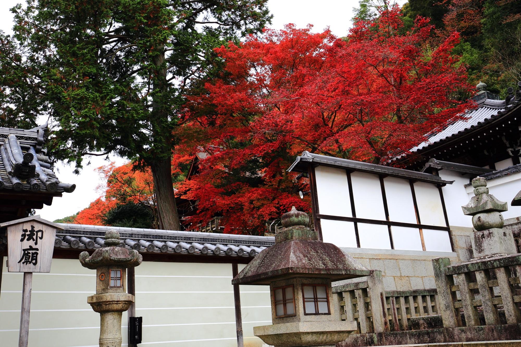 知恩院御廟の燃え上がるような真っ赤な紅葉