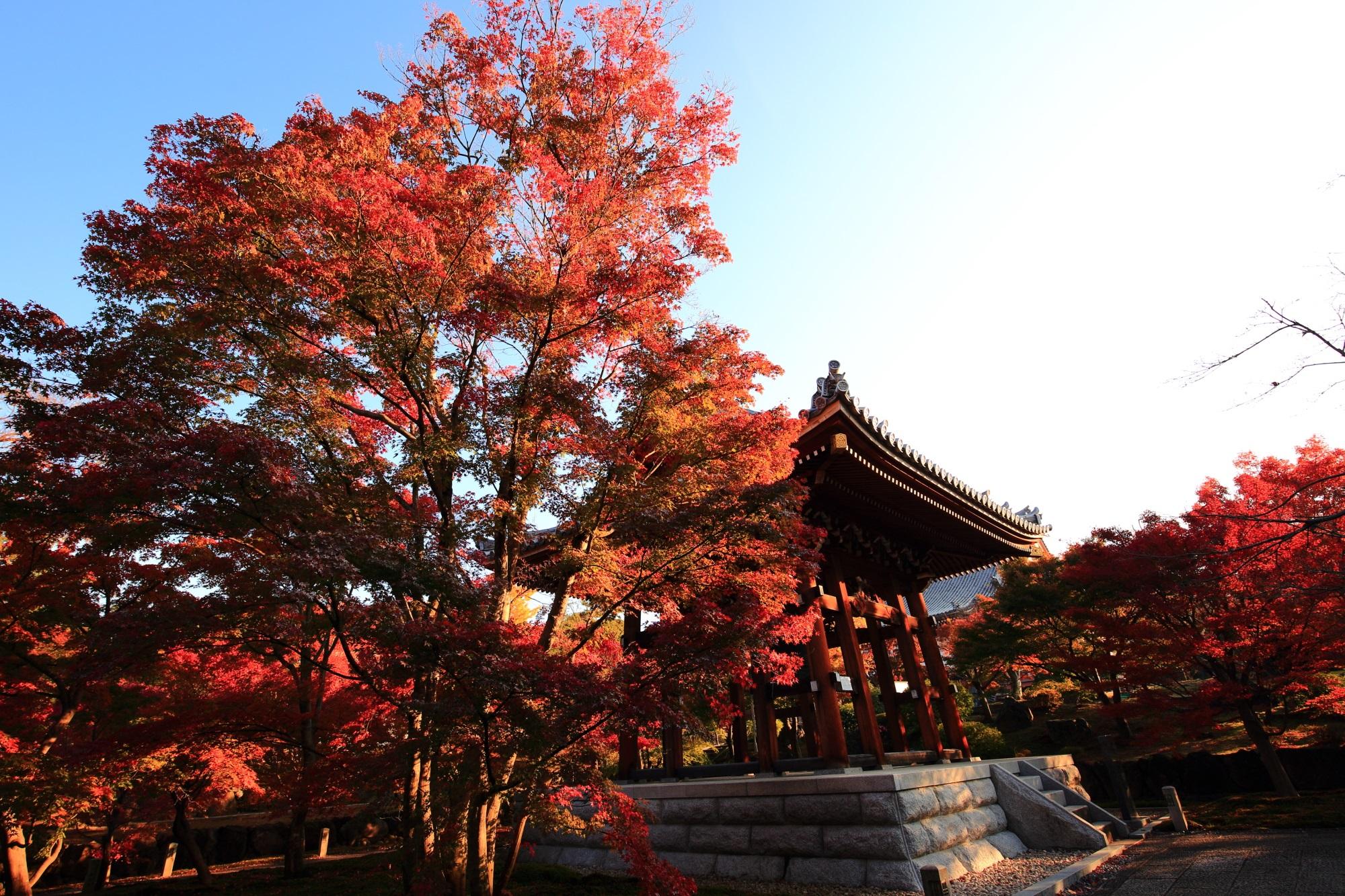 鐘楼を彩る弾けんばかりの豪快な紅葉