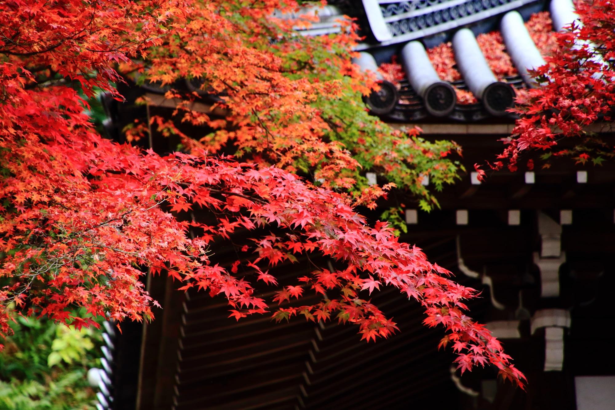 色とりどりの情緒ある紅葉