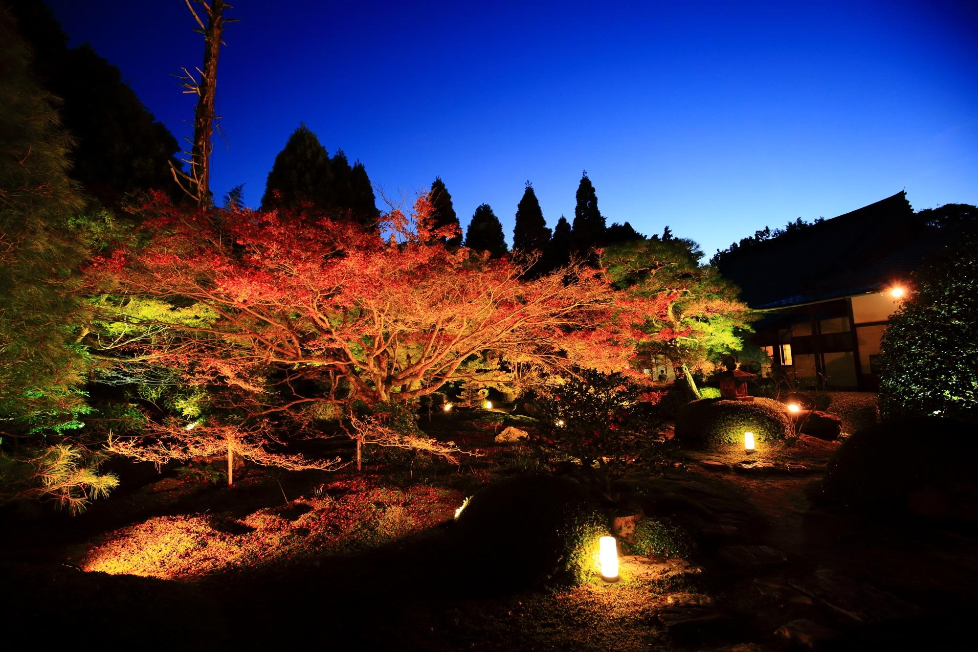 泉涌寺別院の雲龍院の庭園の紅葉ライトアップ