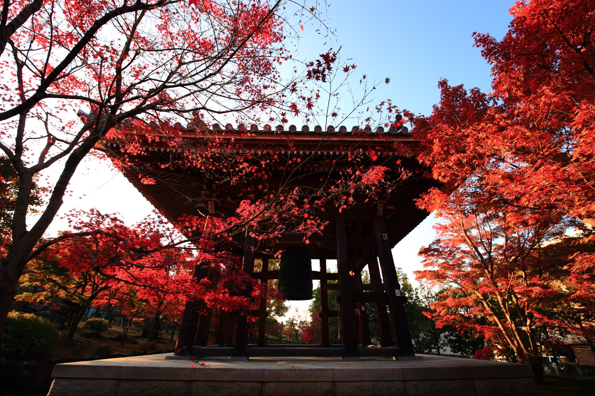 智積院の鐘楼のシルエットに赤く輝く紅葉