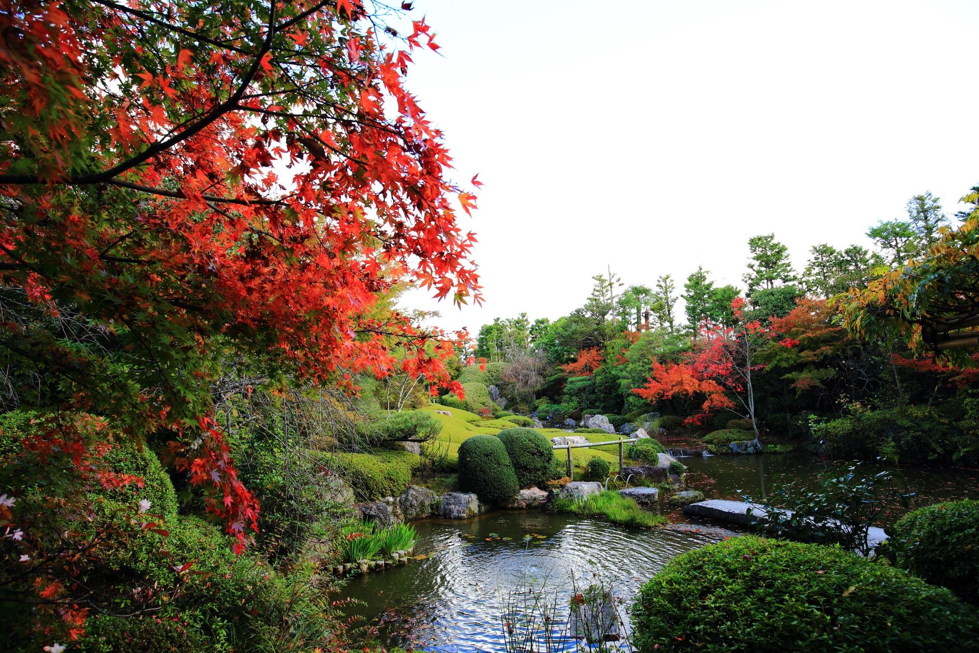 退蔵院の多様な緑を彩る華やかな赤い紅葉