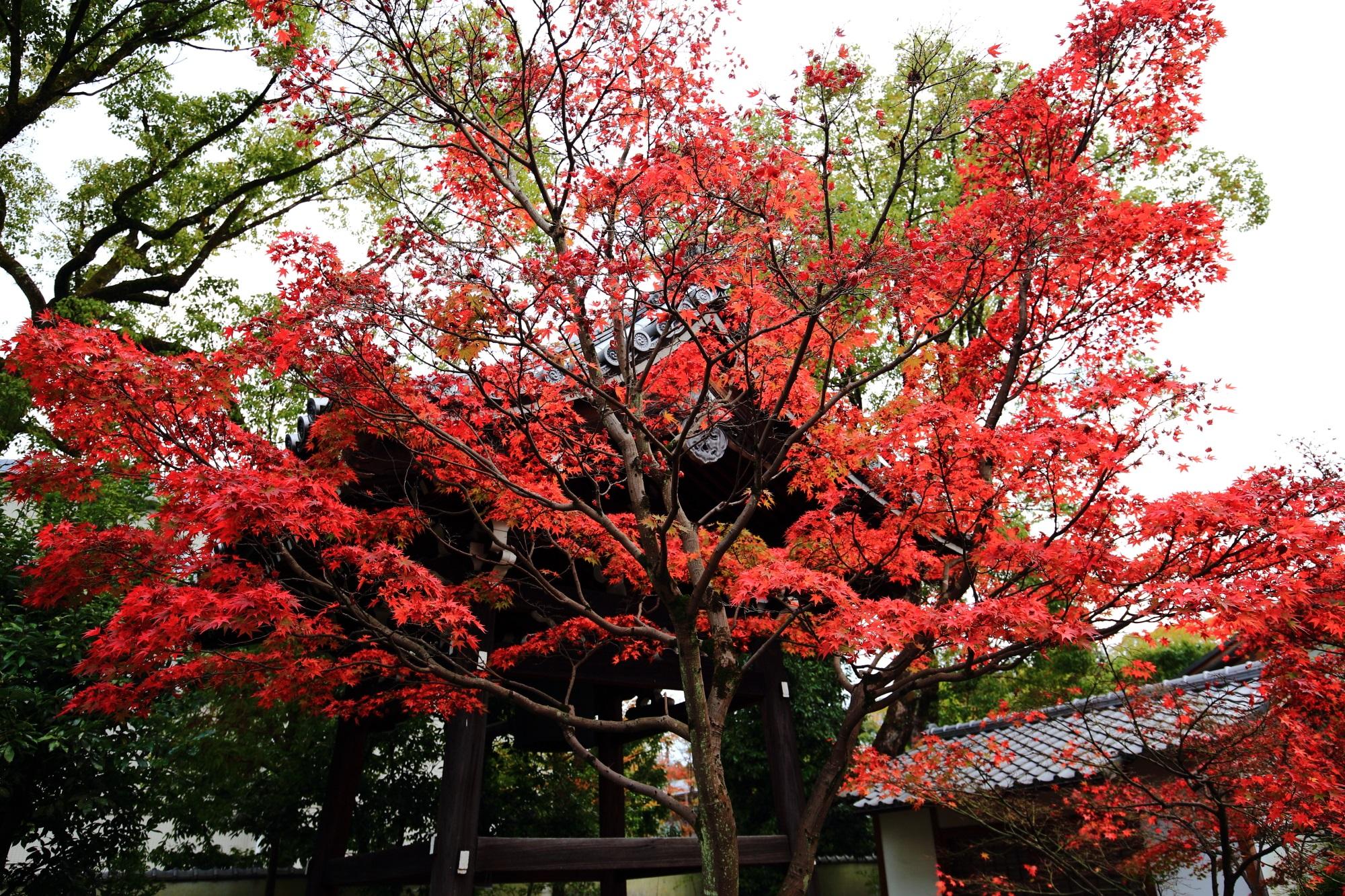 廬山寺の鐘楼と真っ赤な紅葉