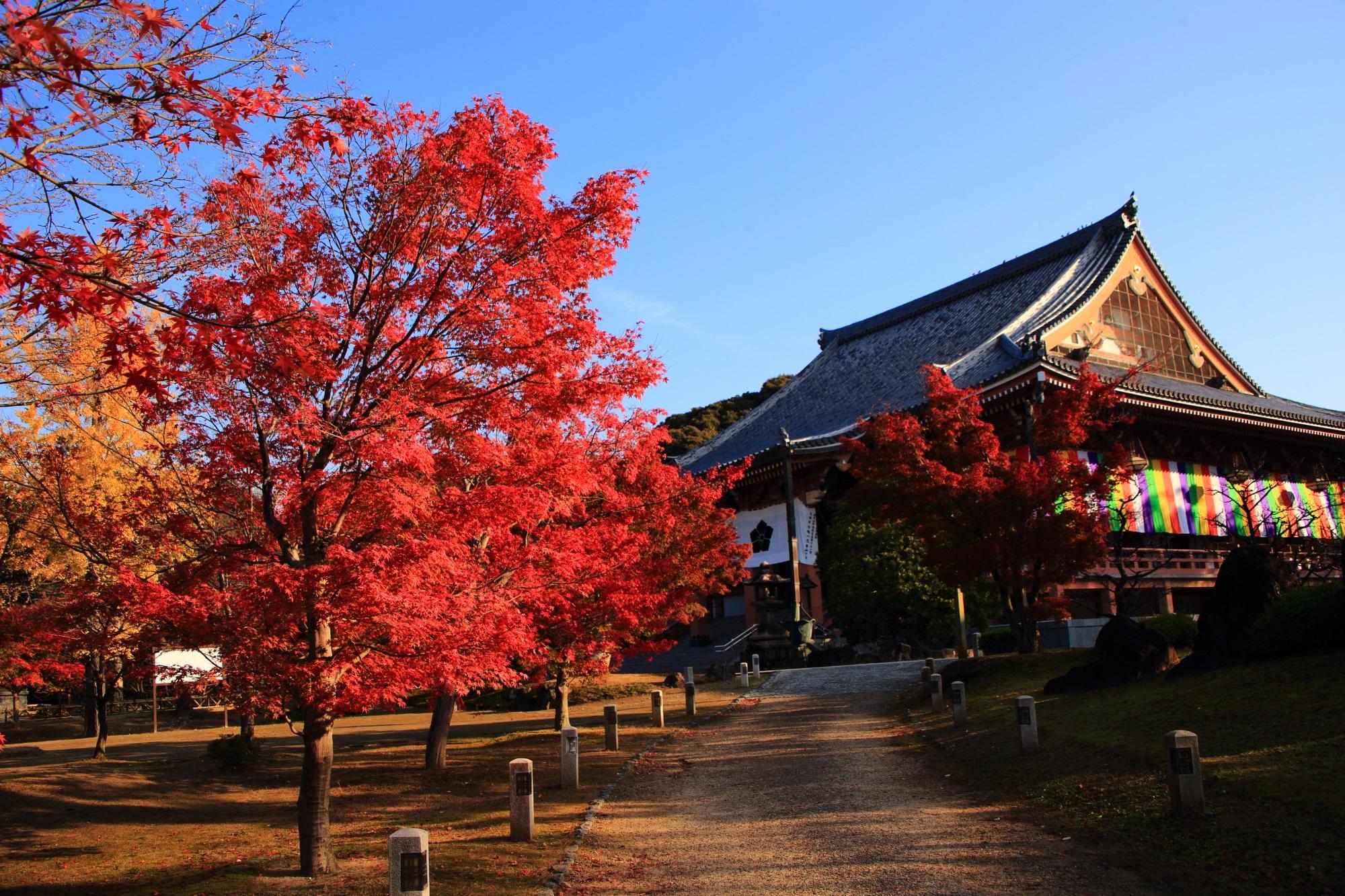 溢れる多彩な秋色と凛として構える金堂