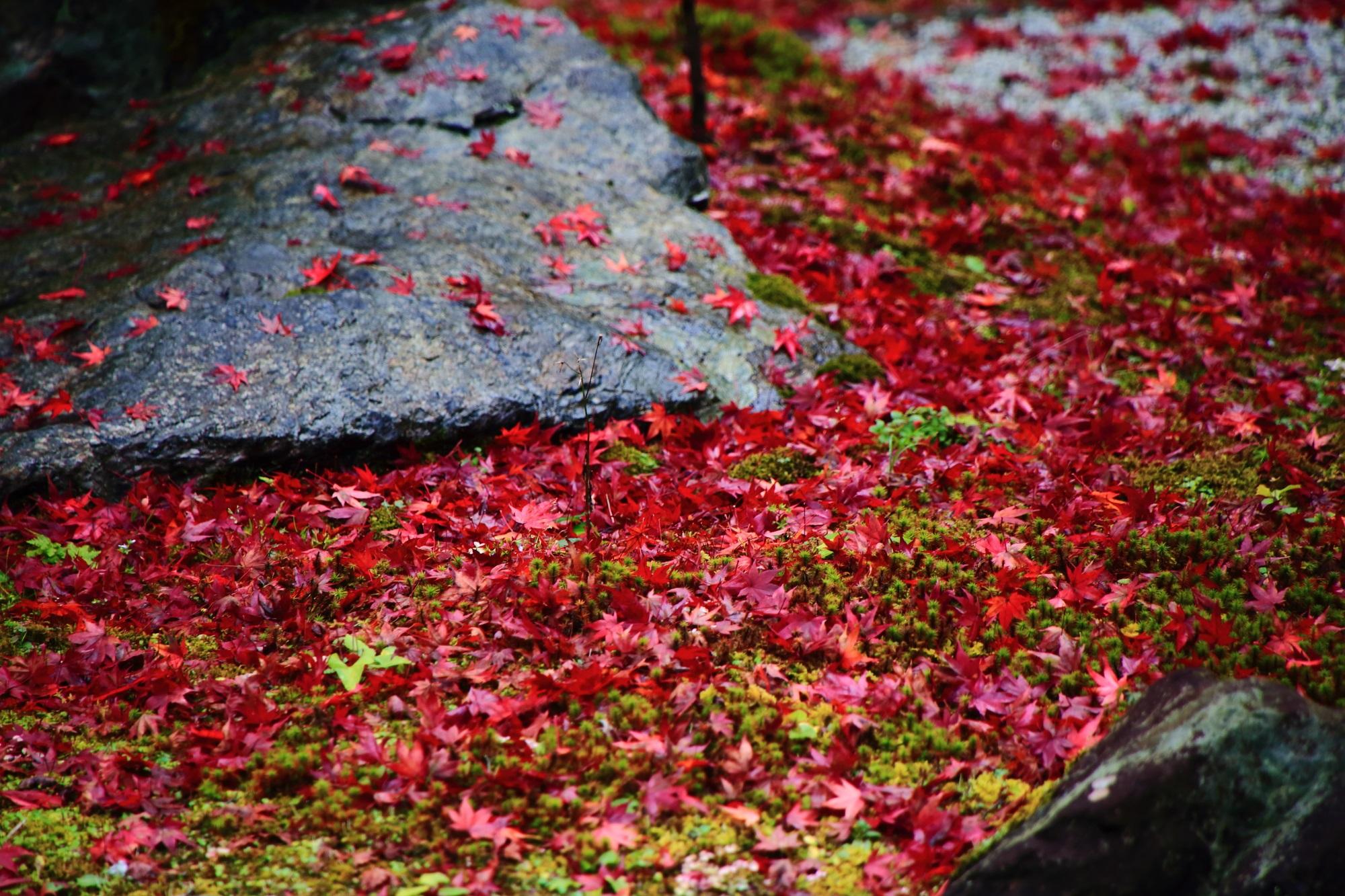 美しい散りもみじにつつまれた直指庵の阿弥陀堂庭園