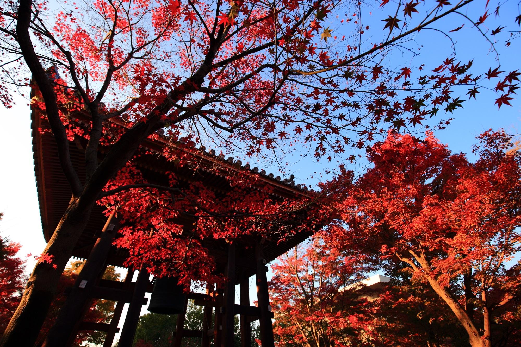 鐘楼を染める日を浴びて輝く真っ赤な紅葉