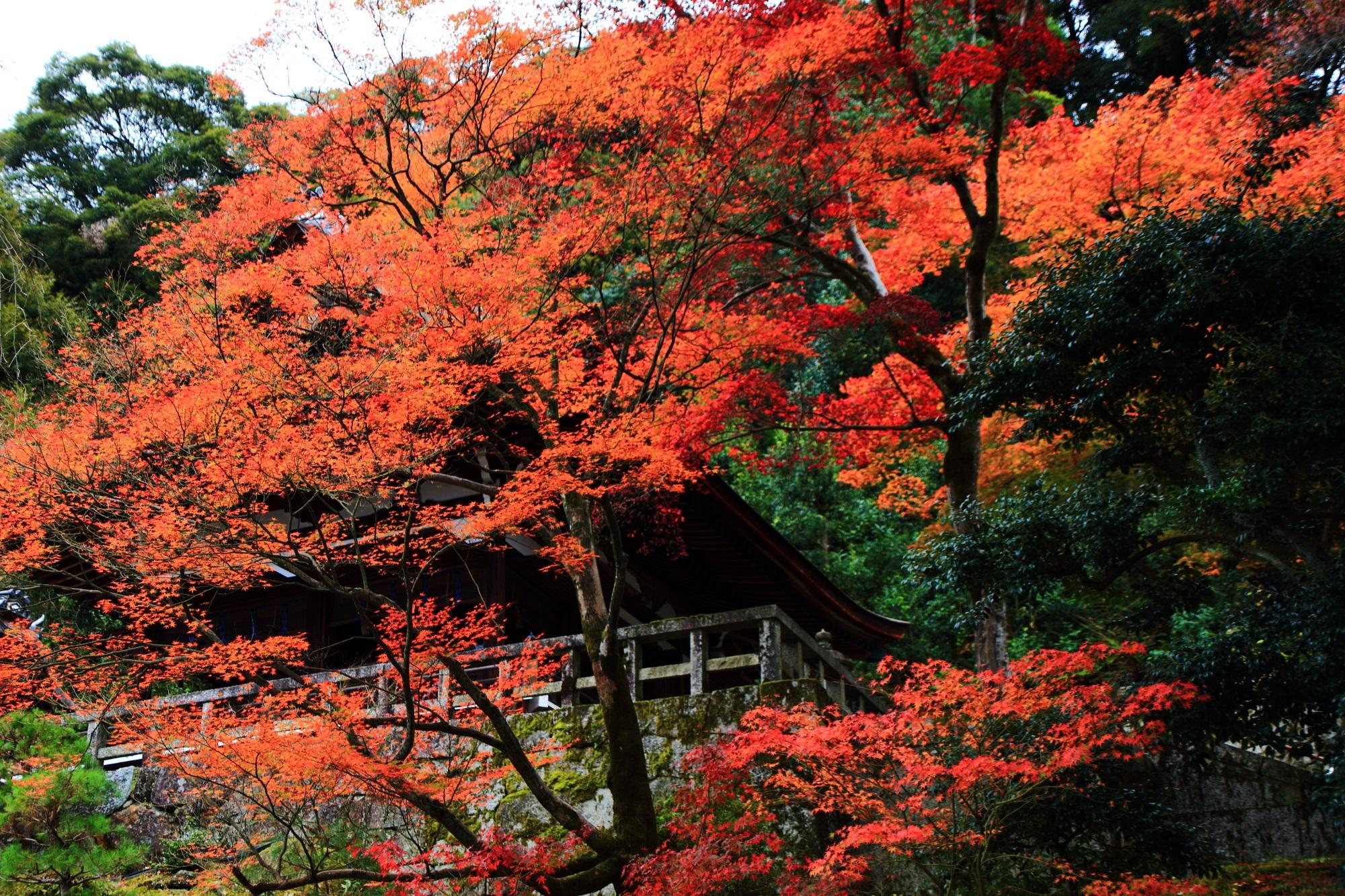 御廟を彩る豪華に溢れる紅葉