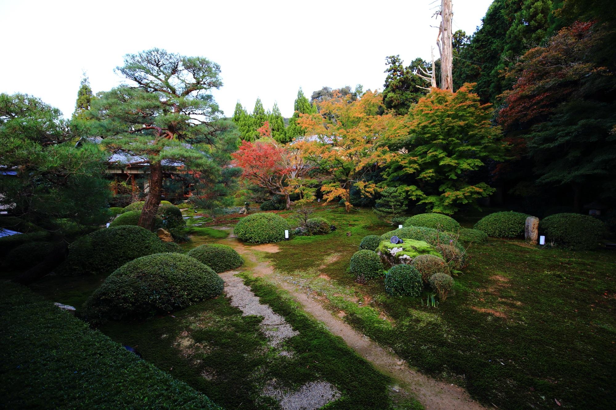 泉涌寺別院の雲龍院の庭園の苔と紅葉