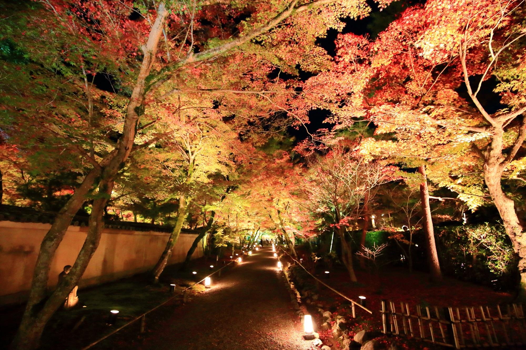 天龍寺塔頭の宝厳院の山門前のもみじのトンネルのライトアップ