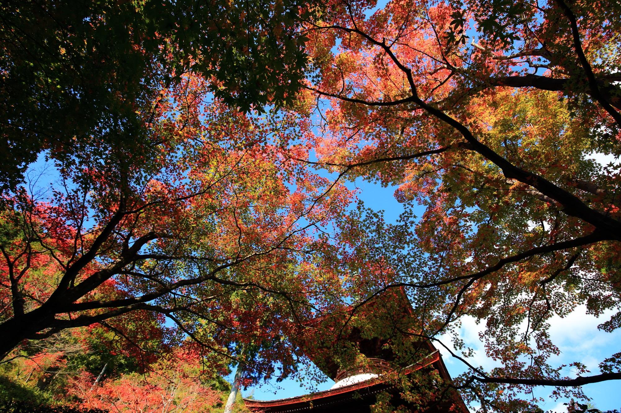 常寂光寺の多宝塔と色とりどりの紅葉
