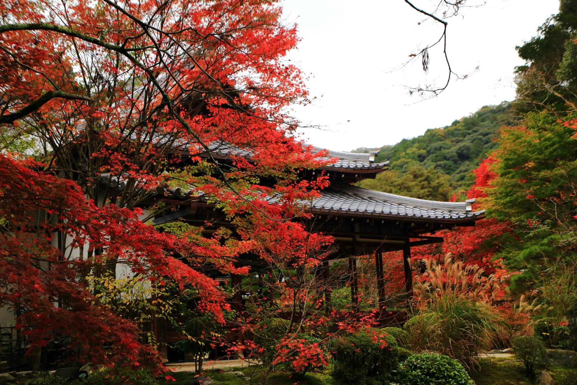 風情ある秋色に染まる天授庵と庭園を華やぐススキ