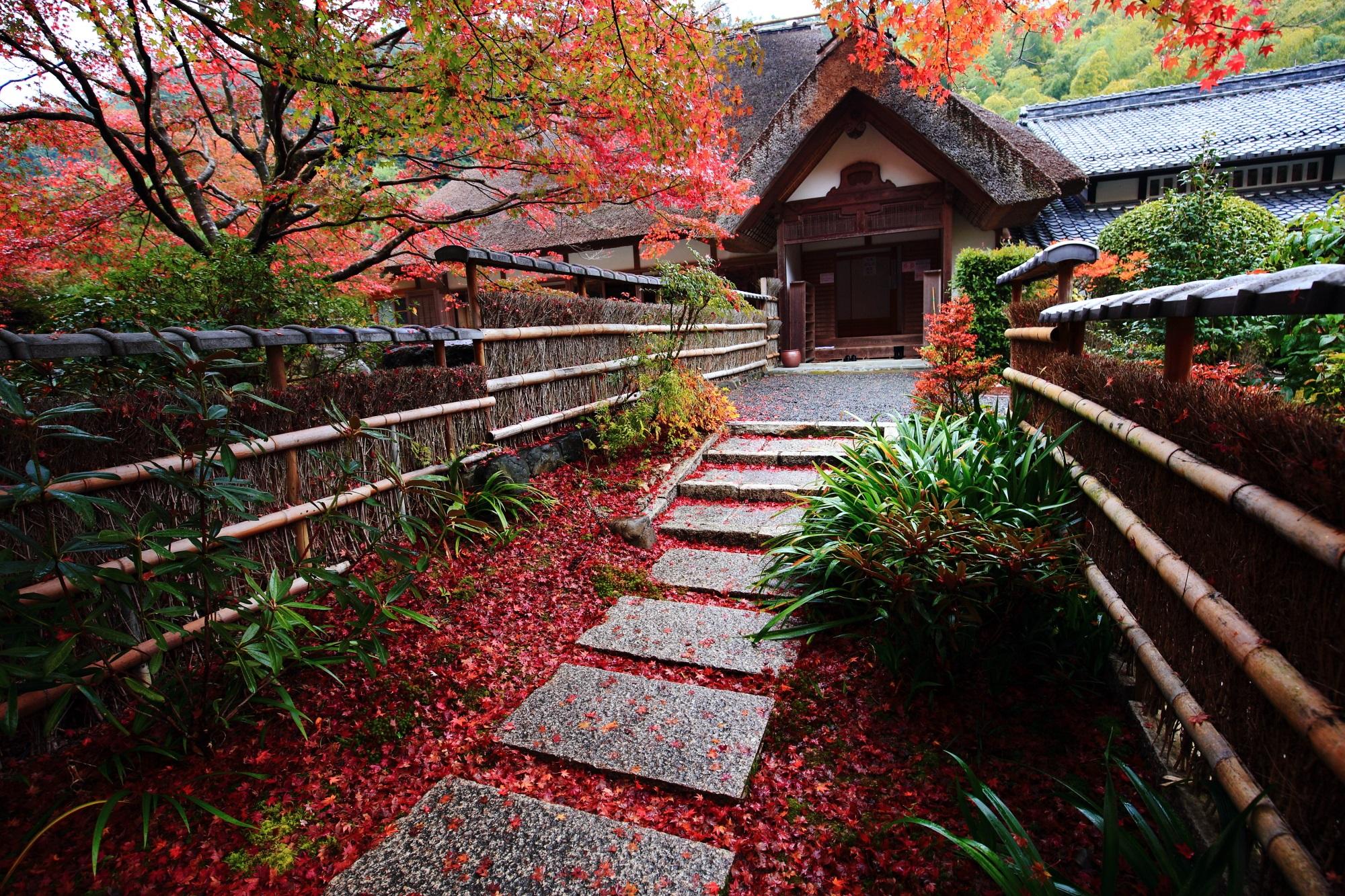 直指庵の阿弥陀堂と見ごろの鮮やかな紅葉