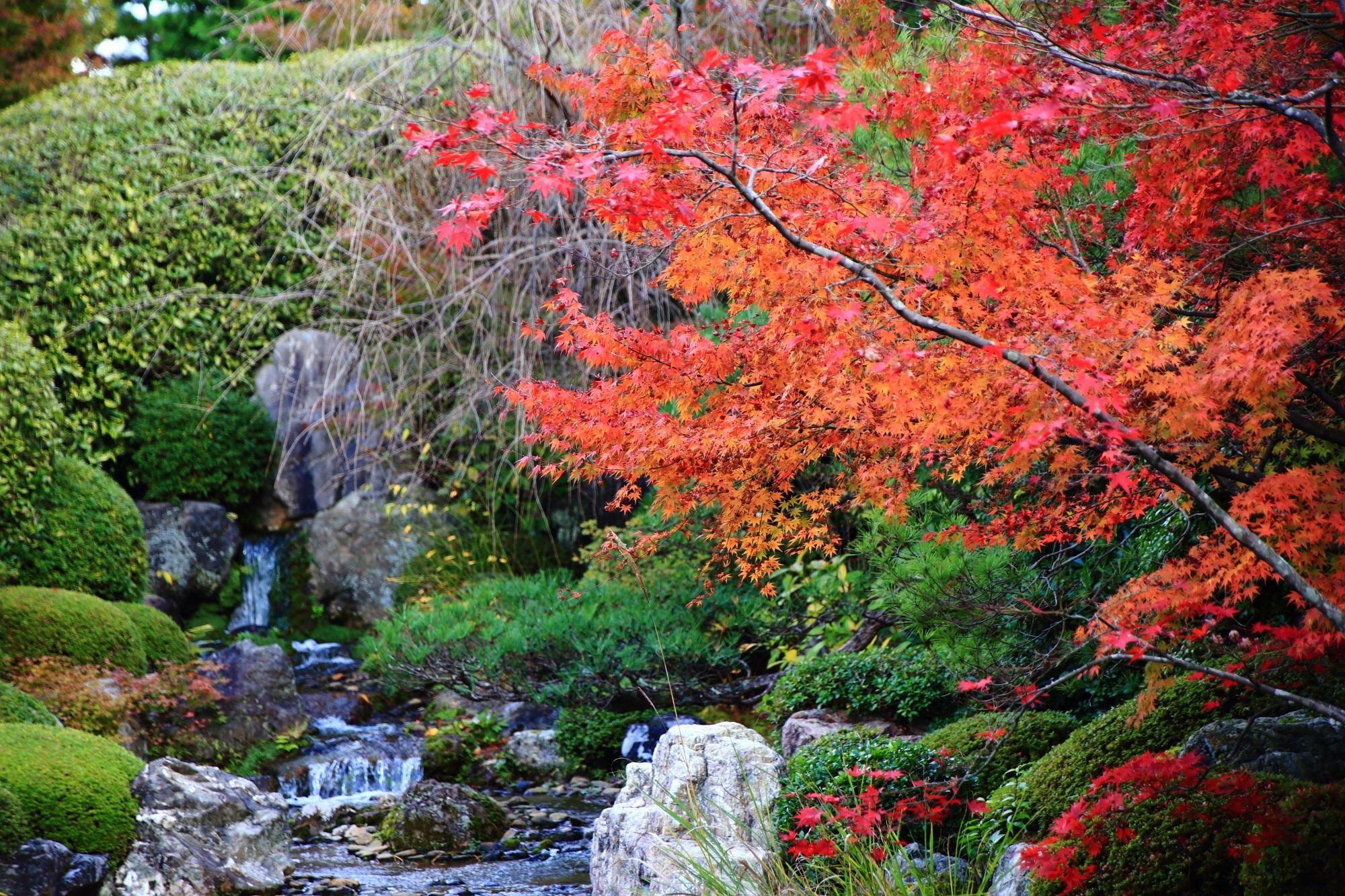退蔵院の緑につつまれた小川を華やぐ鮮やかな紅葉