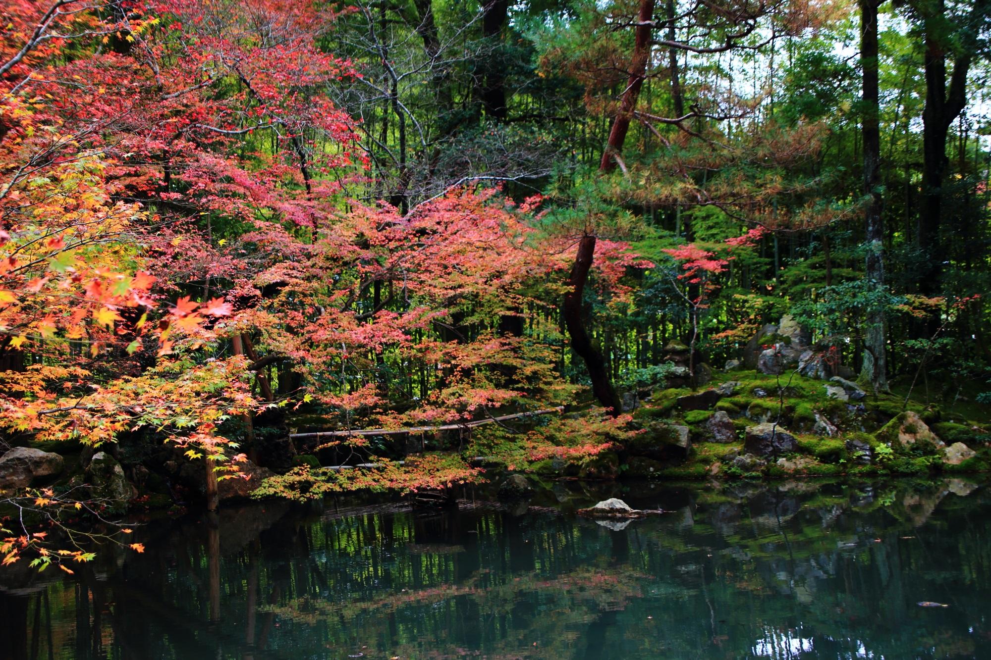 京都の名所の中でも早くに見ごろをむかえる天授庵