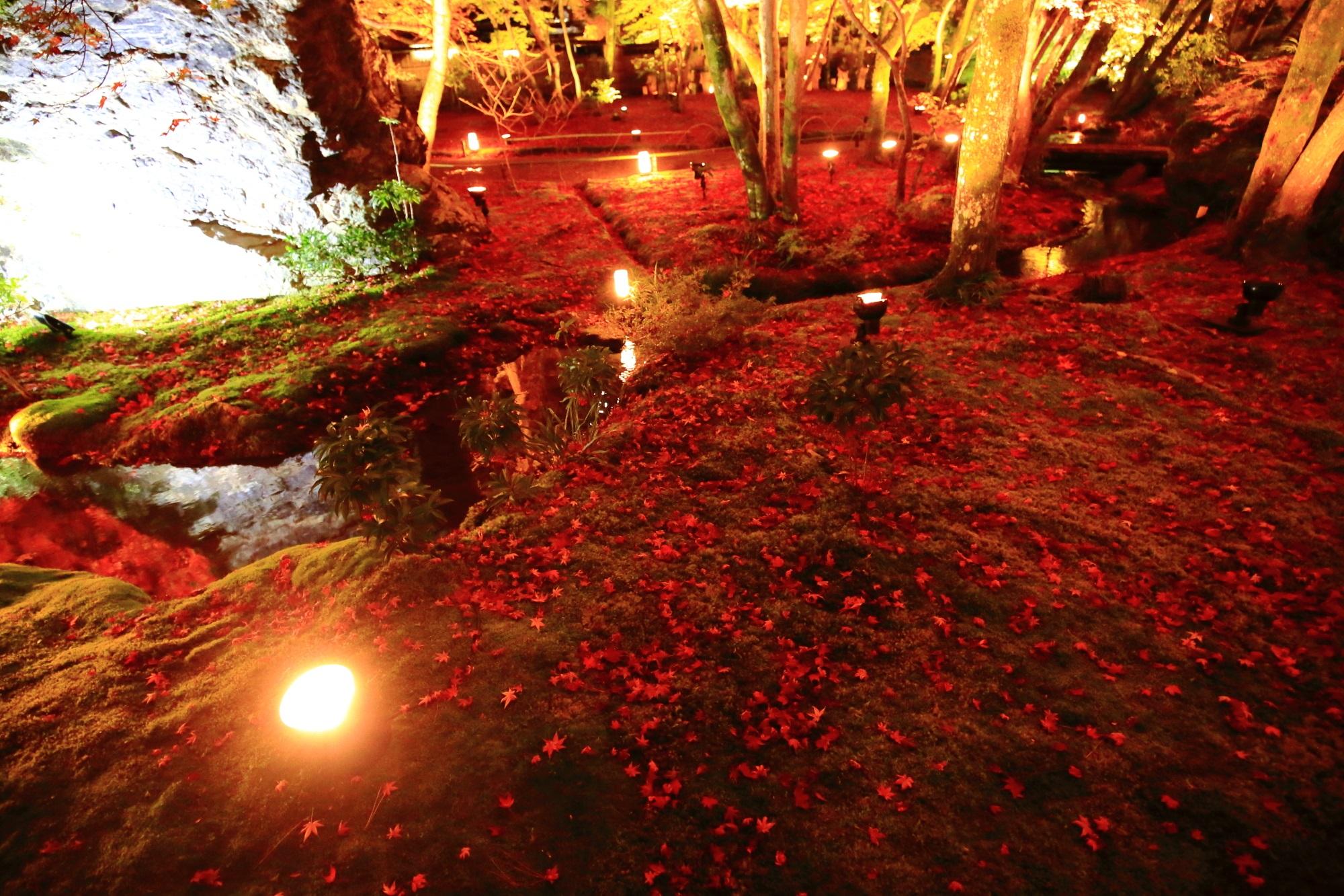 見事な苔と赤い散りもみじにつつまれた宝厳院の獅子吼の庭のライトアップ