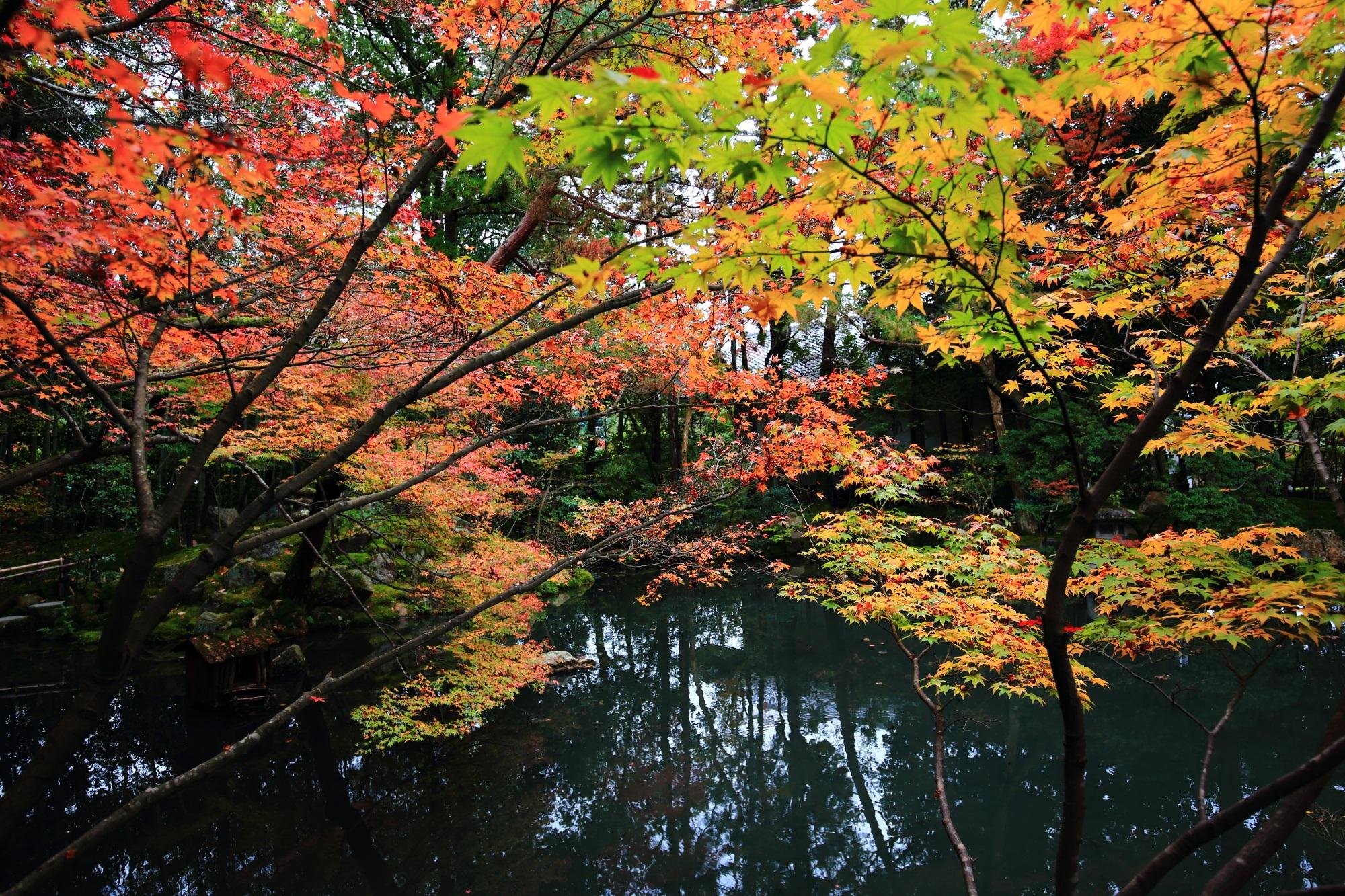 南禅寺塔頭の天授庵の池にせり出す紅葉