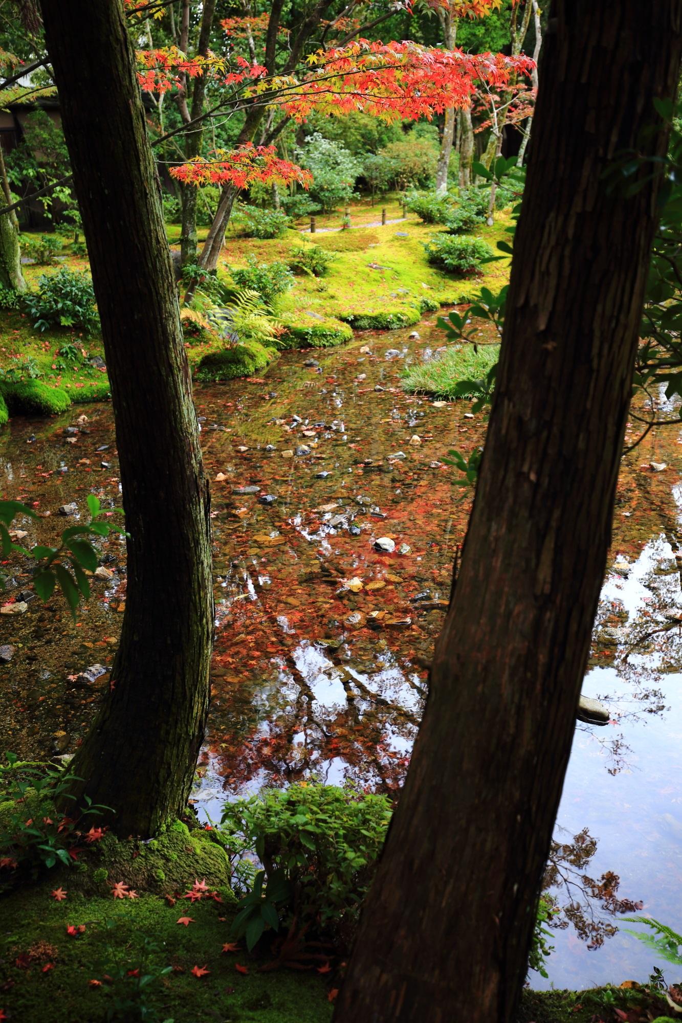 紅葉や緑の綺麗な水鏡