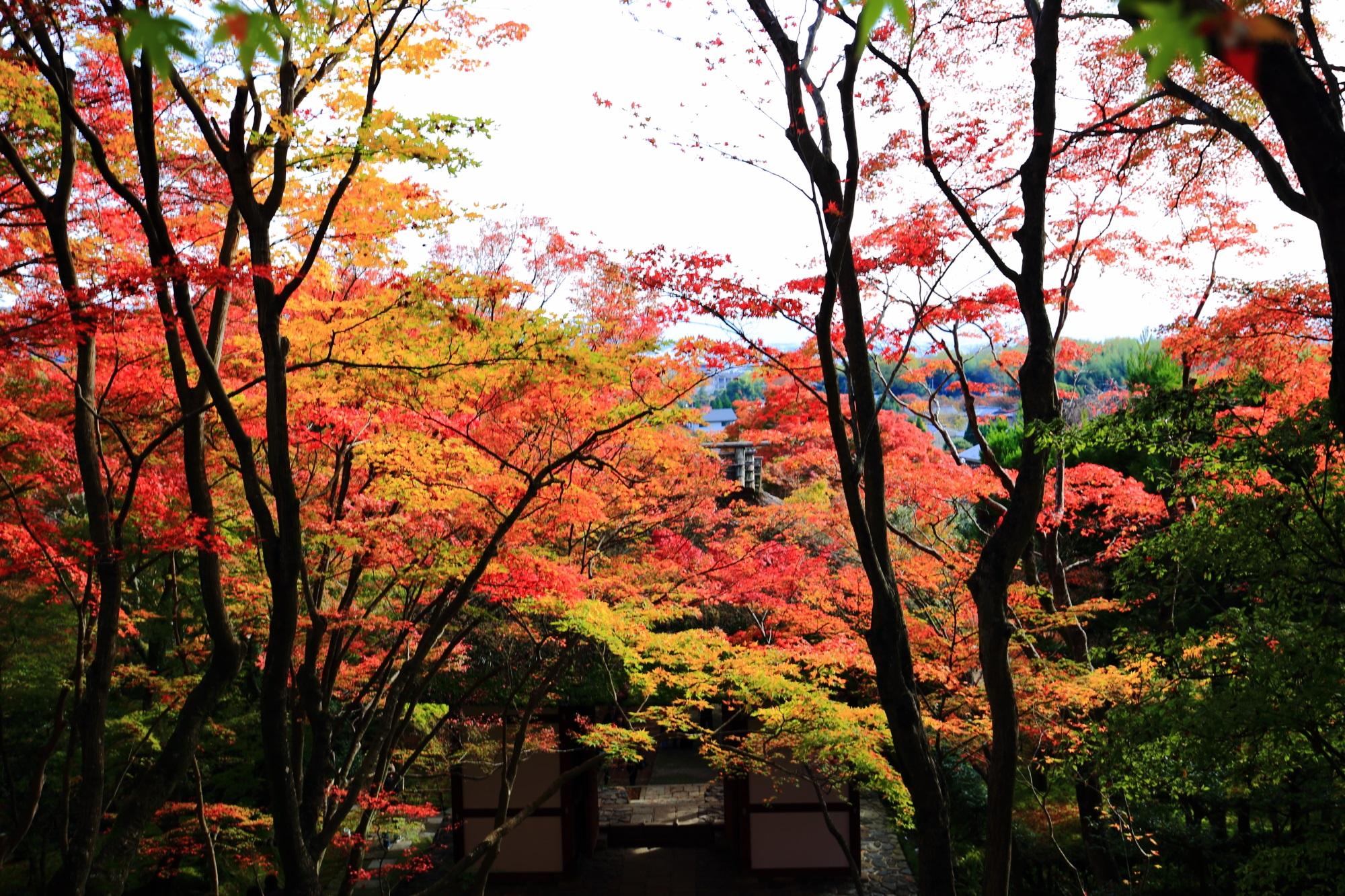 常寂光寺の仁王門と見ごろの華やかな紅葉