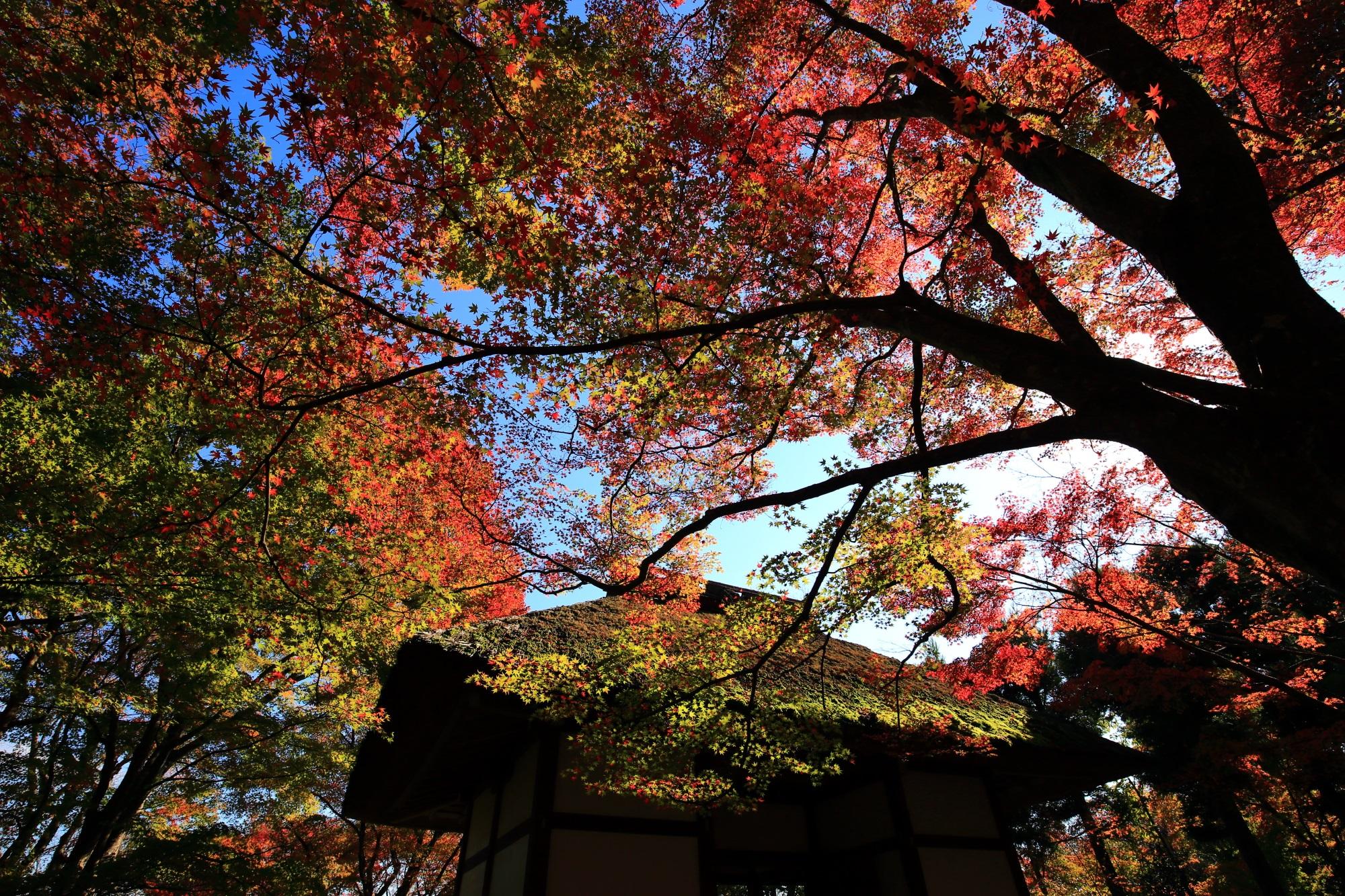 常寂光寺の仁王門と見ごろの鮮やかな紅葉