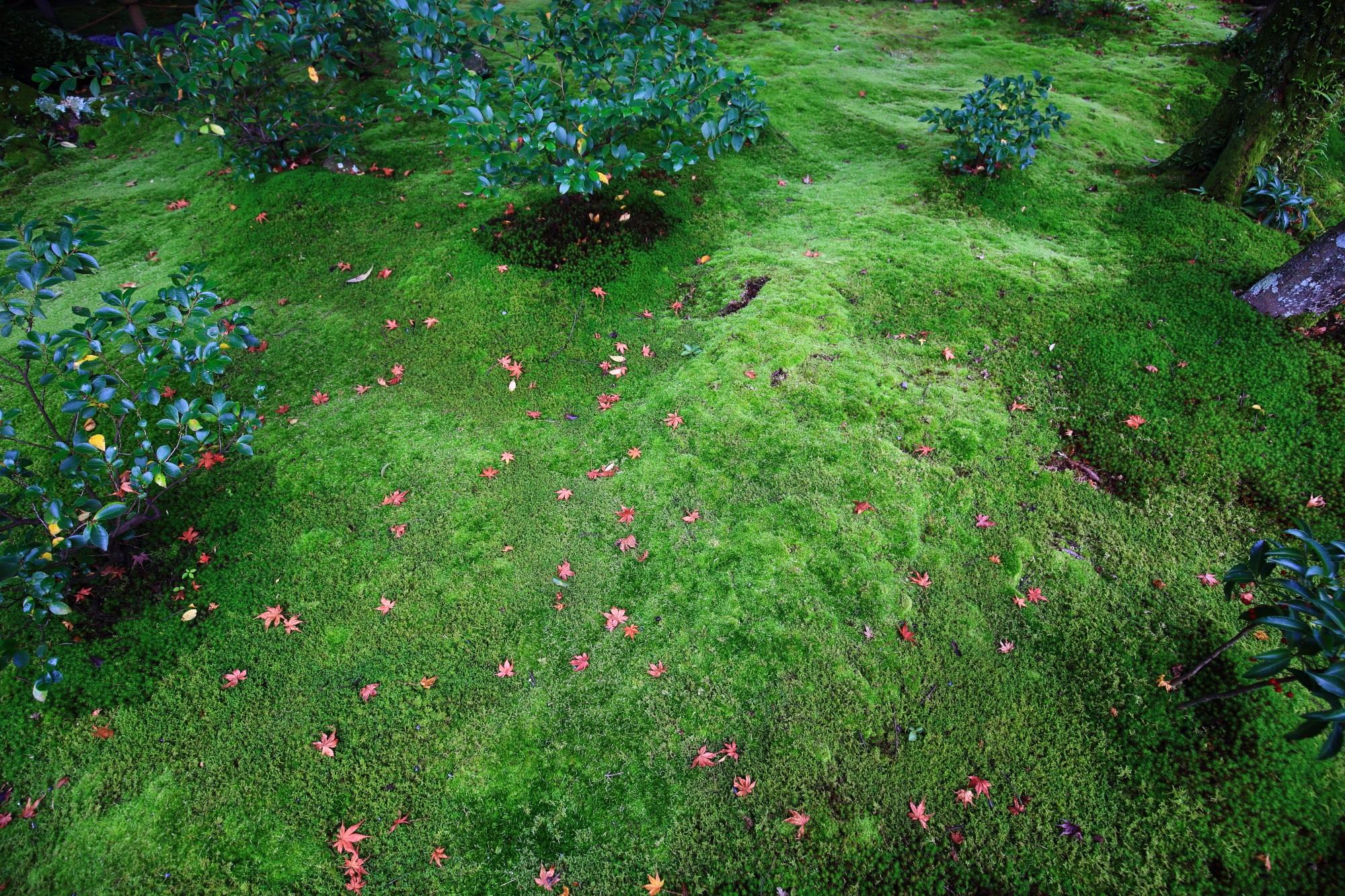 無鄰菴の柔らかな色合いの緑の苔に散る控えめな紅葉