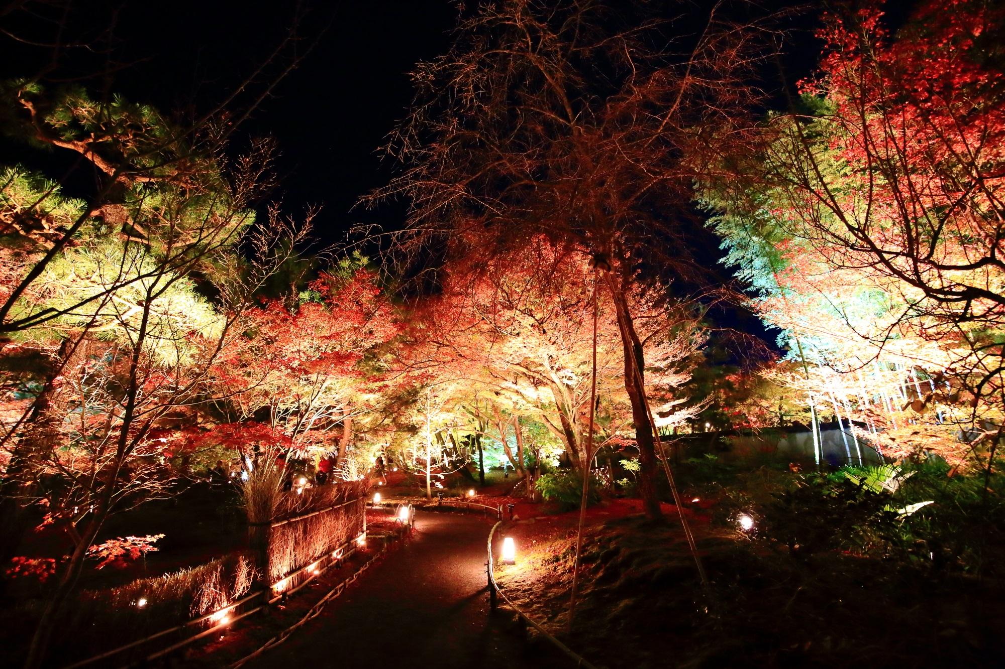 天龍寺 宝厳院の入口付近の参道の紅葉ライトアップ