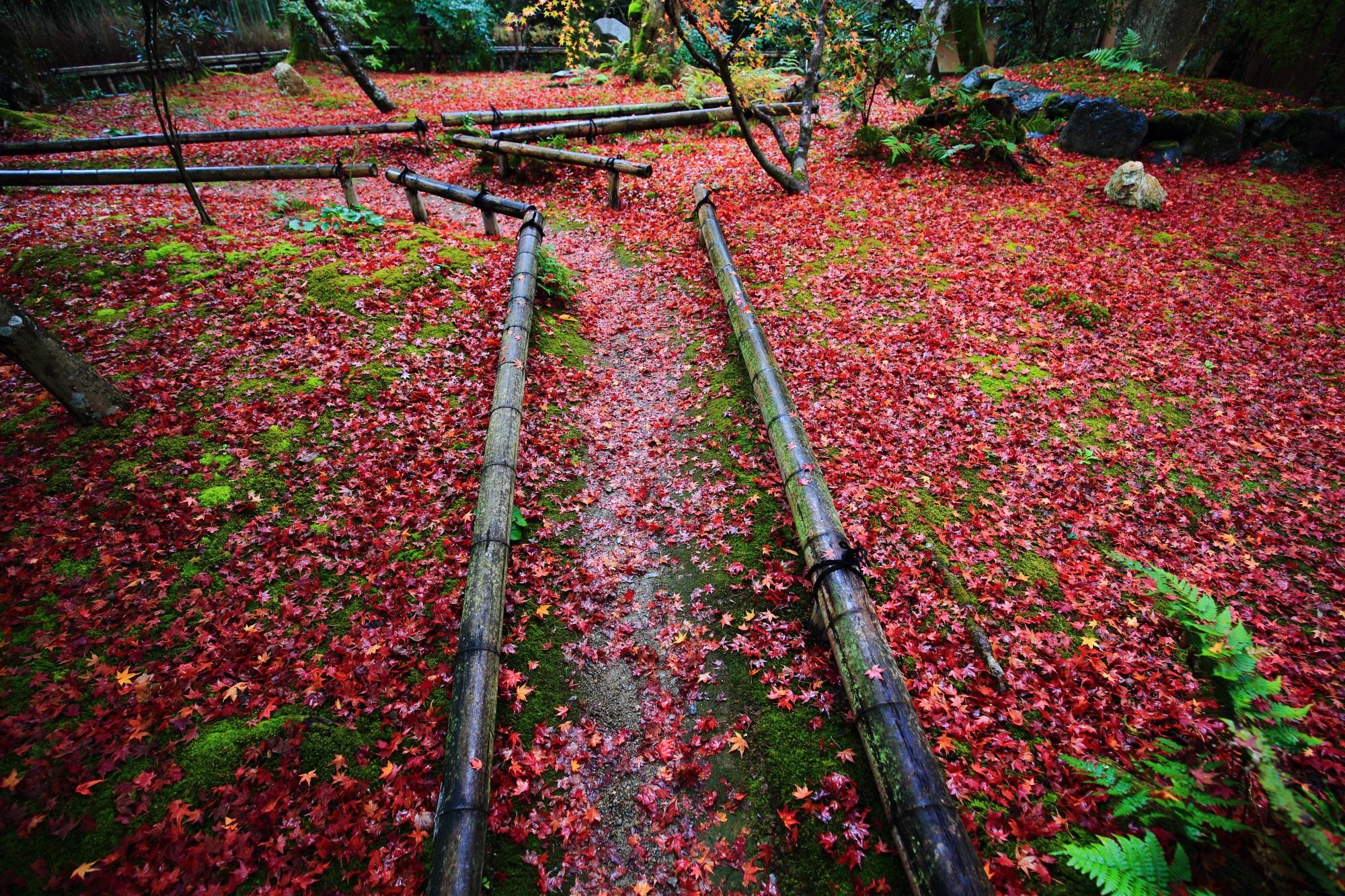 直指庵の苔庭の見事な散りもみじ