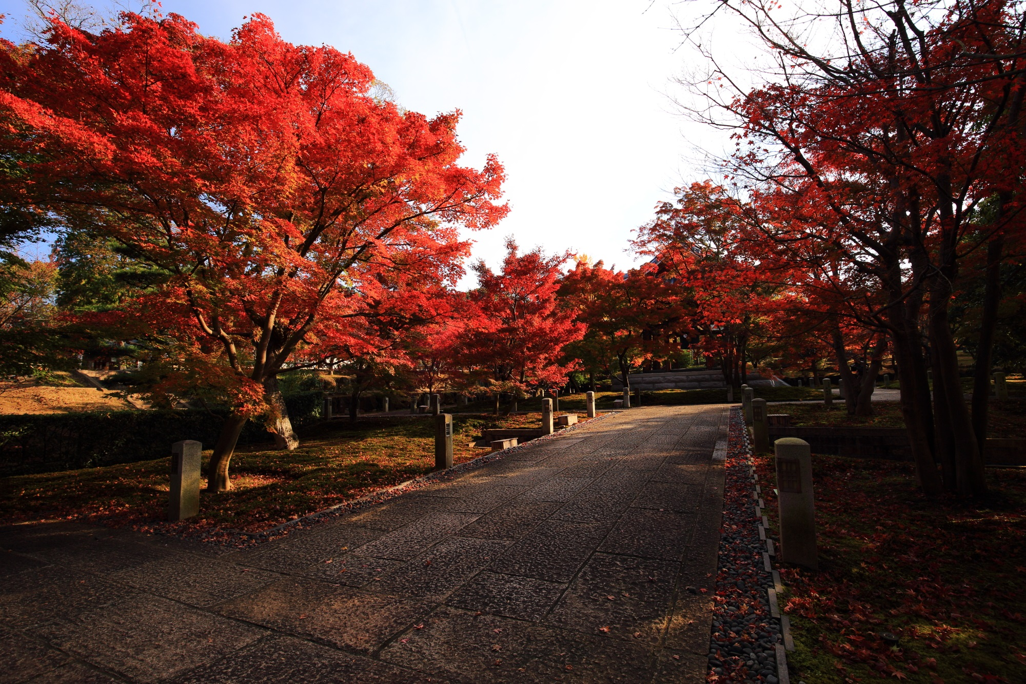 智積院の鐘楼前の参道と日を浴びて煌く紅葉