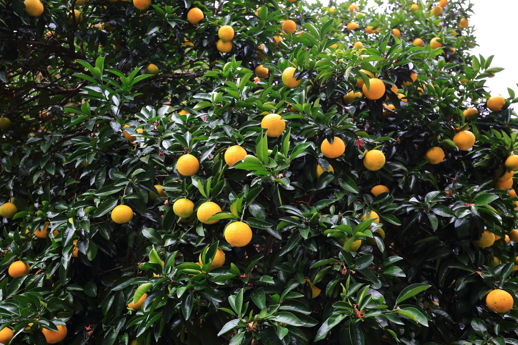 御廟前の石段横の果物
