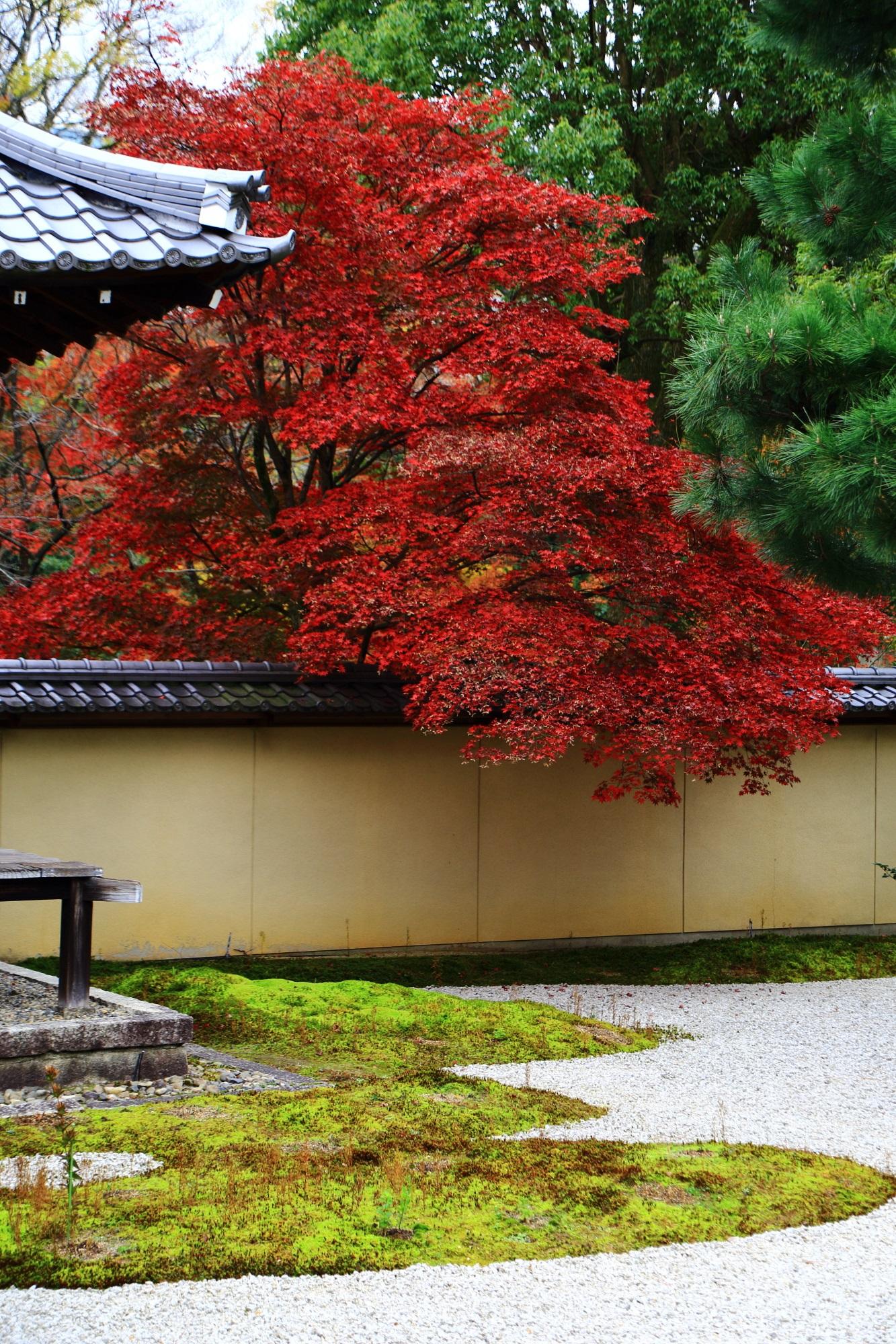 紫式部ゆかりの廬山寺の源氏庭の見事な紅葉