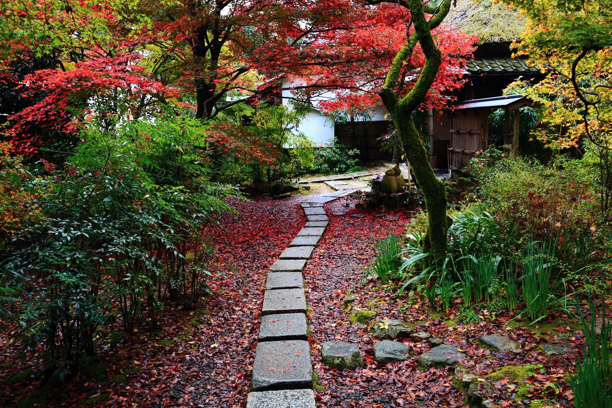 紅葉の穴場の嵯峨直指庵(じきしあん)の本堂前の華やかな紅葉