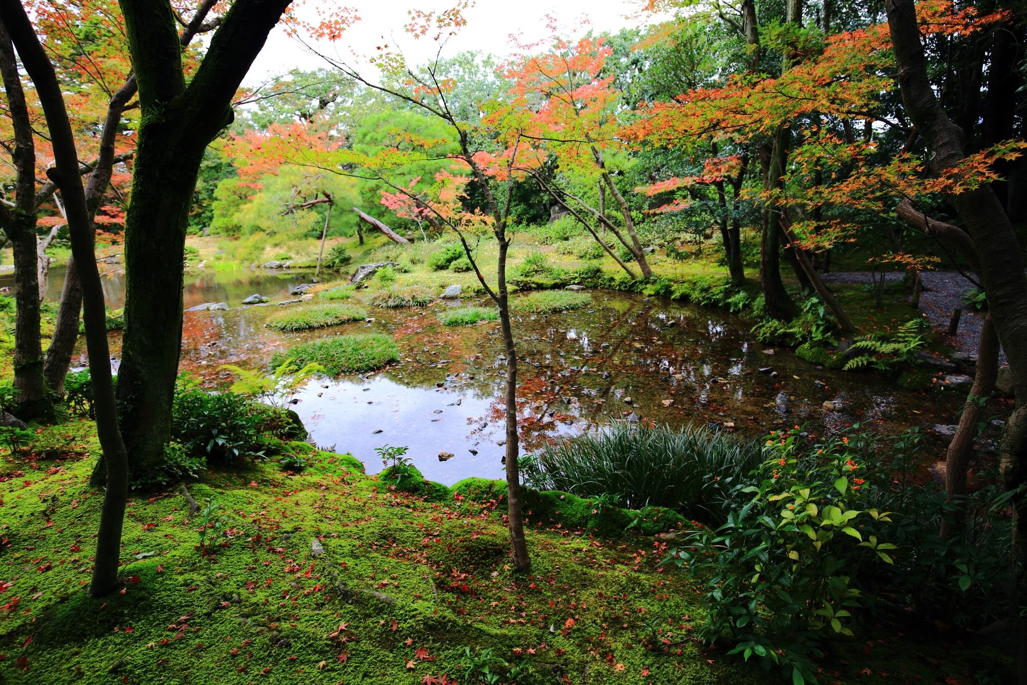 水辺を染めるほのかな秋色と散りもみじ