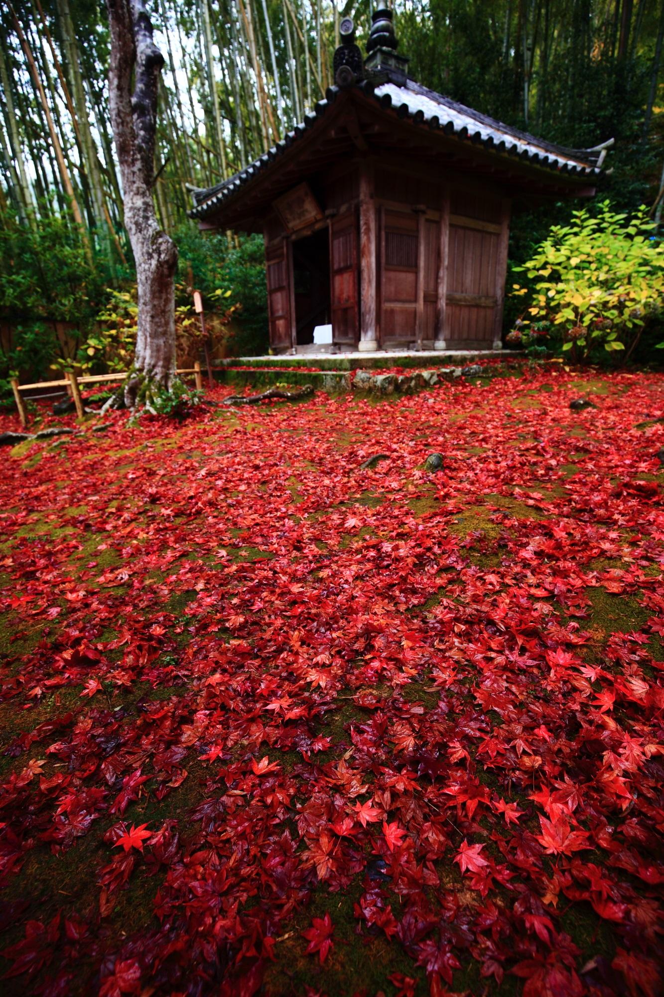 直指庵(じきしあん)の開山堂の雨の美しい圧巻の散りもみじ